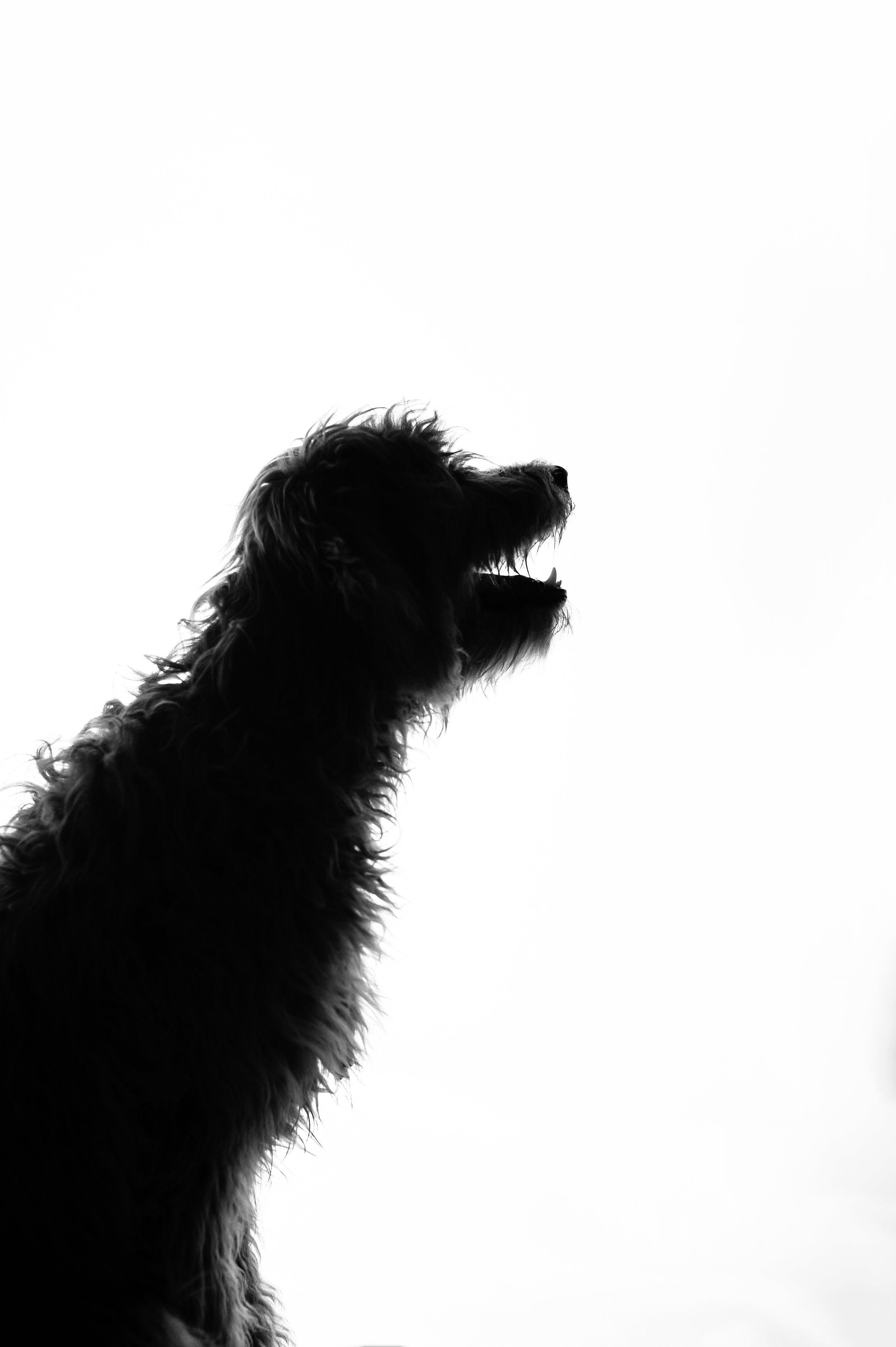 austin dog photographer (1 of 1)-9.JPG