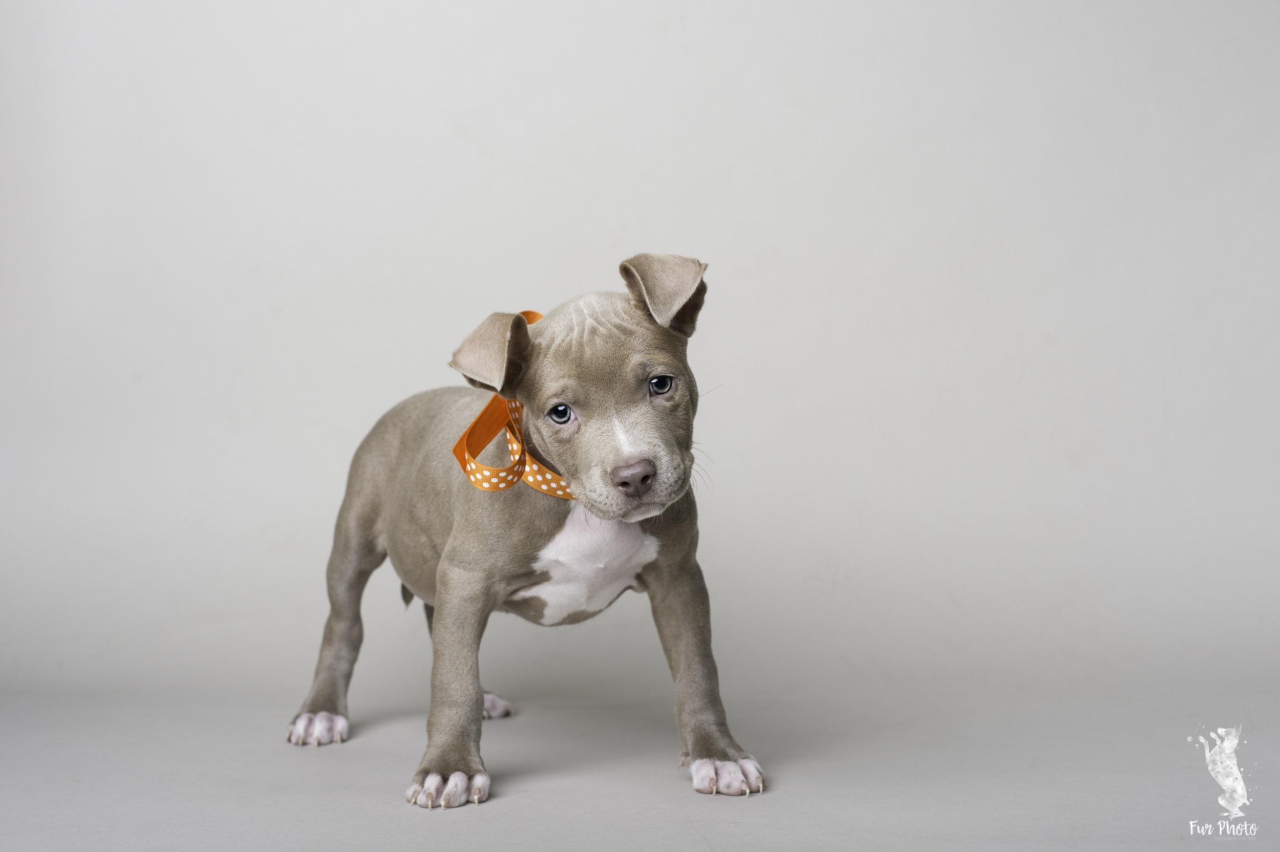 Austin puppy photographer.jpg