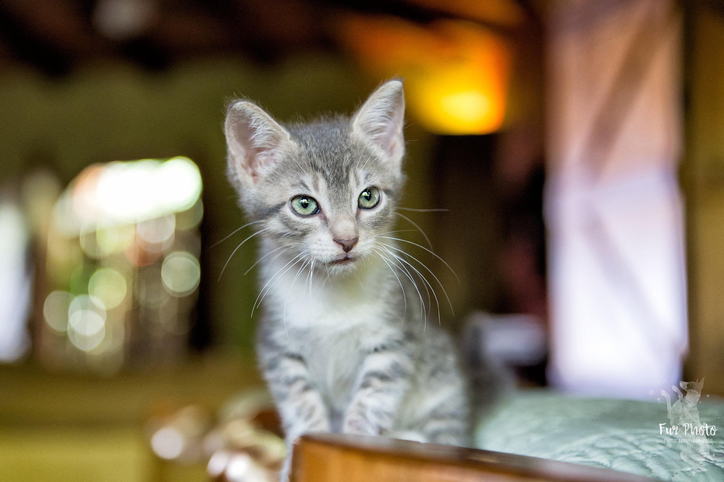 Austin cat photographer.jpg