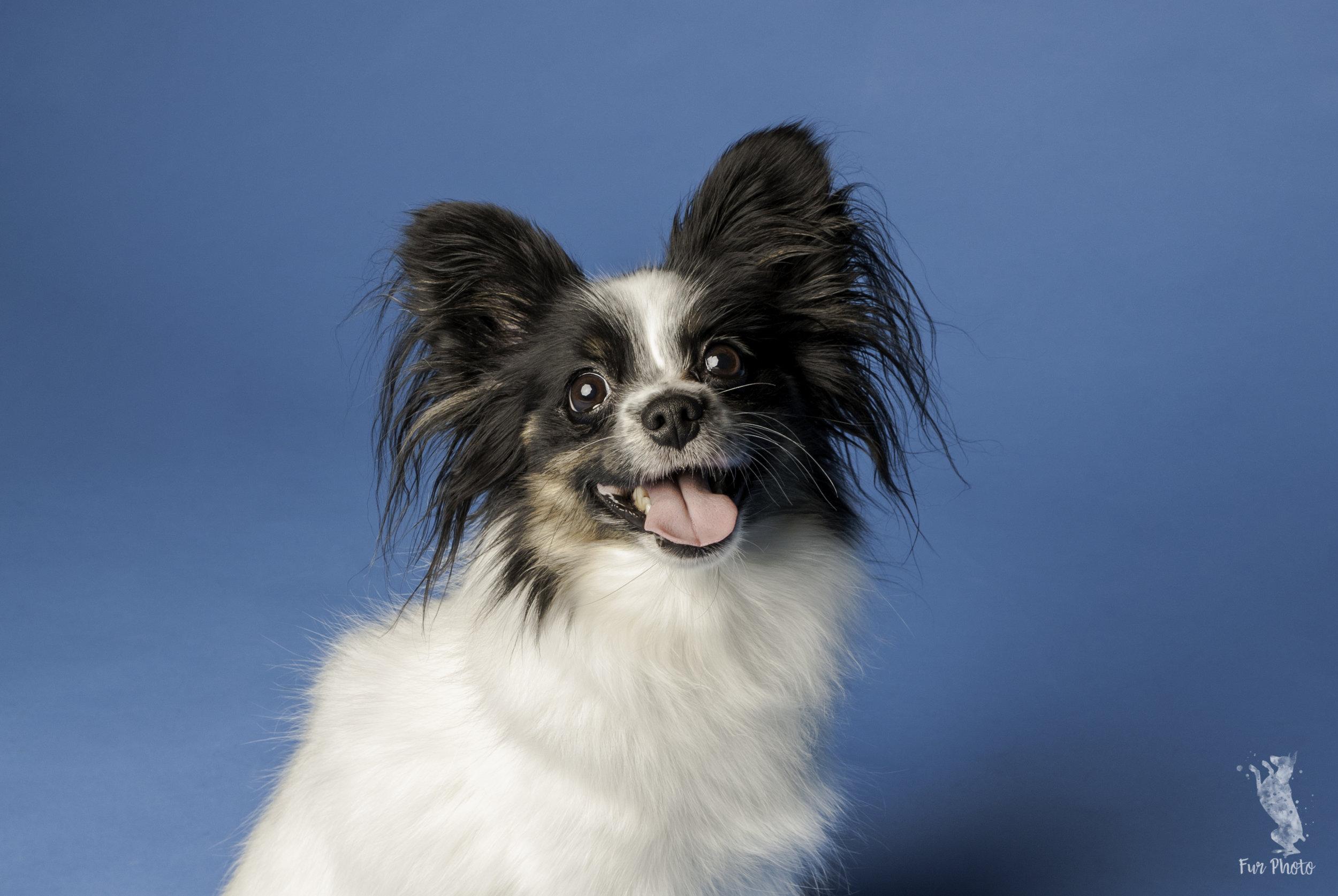 Austin studio dog photography.jpg