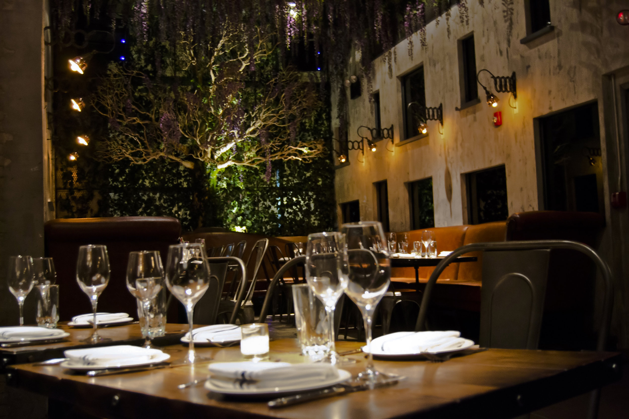 9 TORO BACK PDR Seated Dinner.jpg