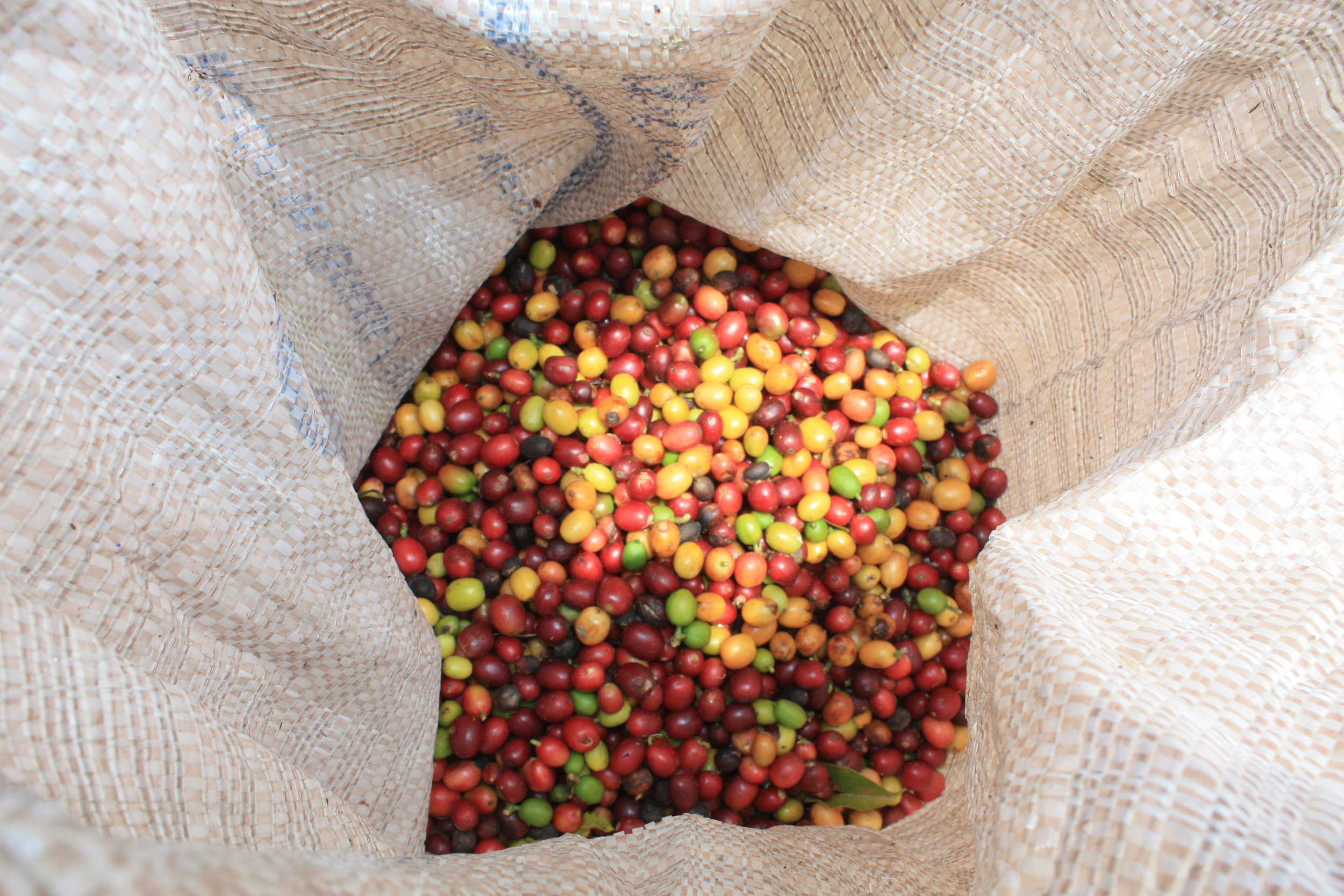 Colombia Manizales Coffee.jpg