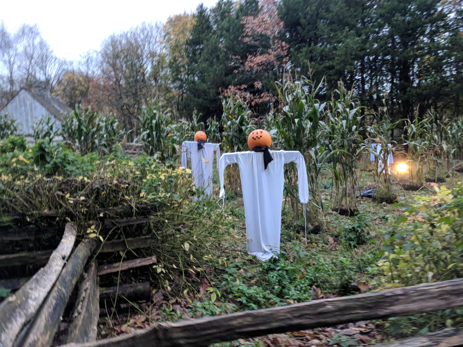 pumpkin scarecrows.jpg
