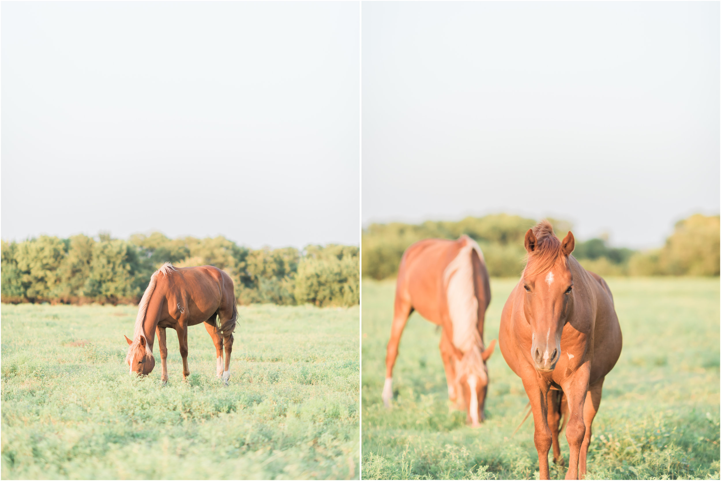 Natalie Imhoff Photography - Frisco Family Photographer - Beckys Hope Horse Rescue - Horse Photography 1.jpg