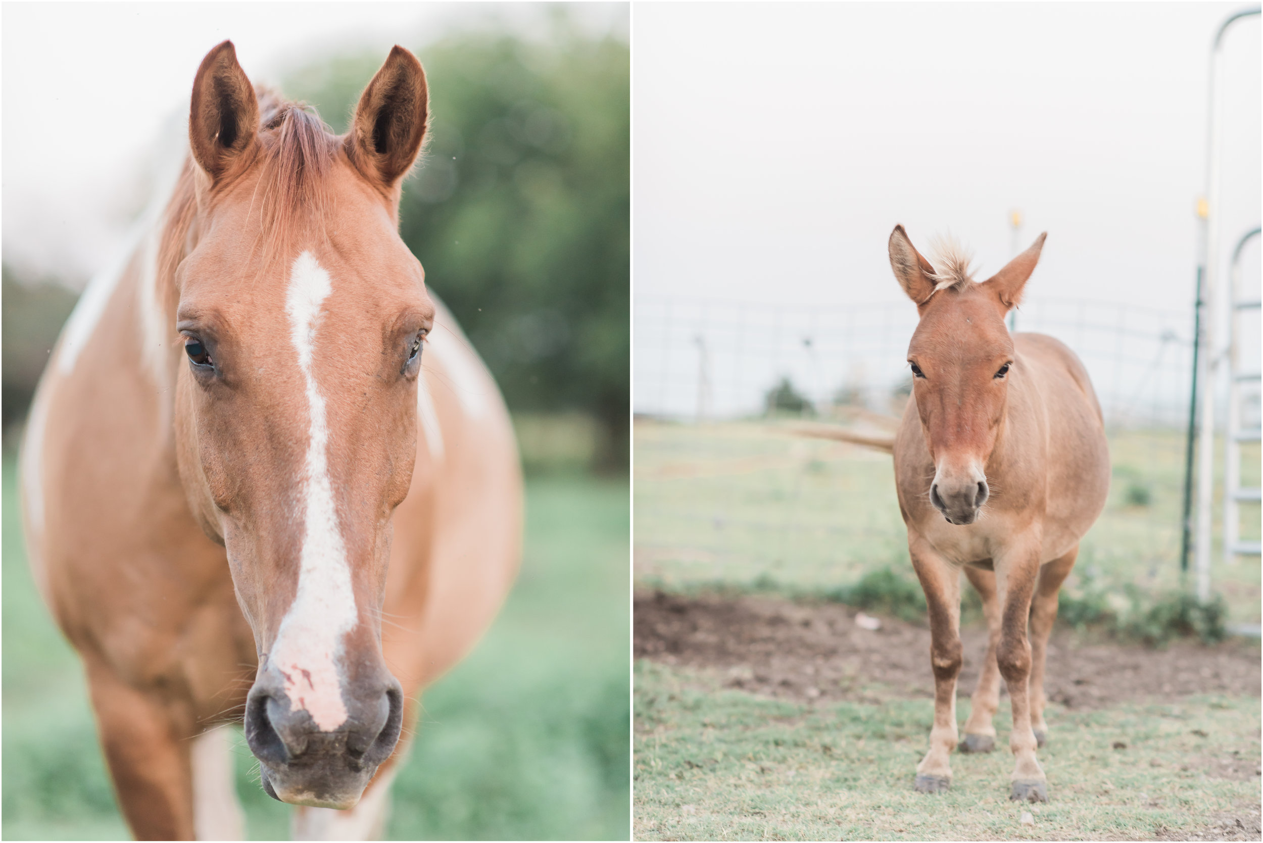Natalie Imhoff Photography - Frisco Family Photographer - Beckys Hope Horse Rescue - Horse Photography 3.jpg