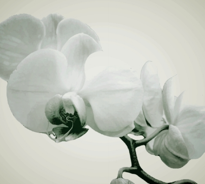 orchid resize.jpg