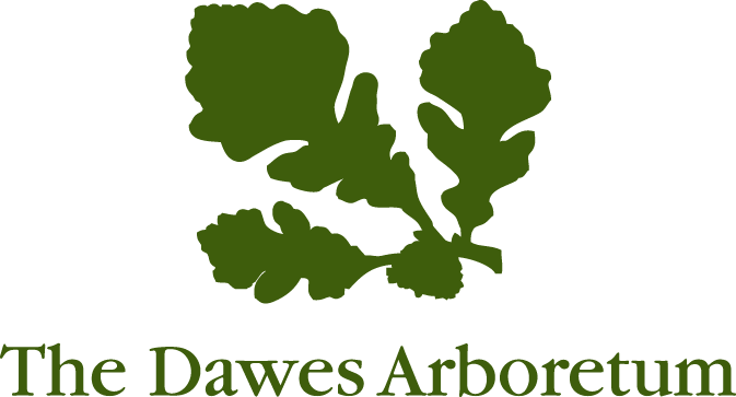 Dawes logo - no tag line green.png