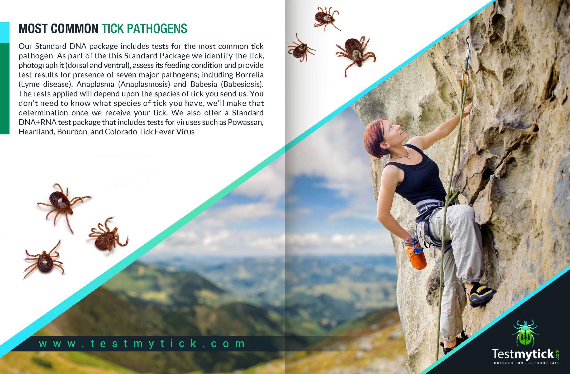 Tick Disease and Testing_Brochure_9_150617.jpg