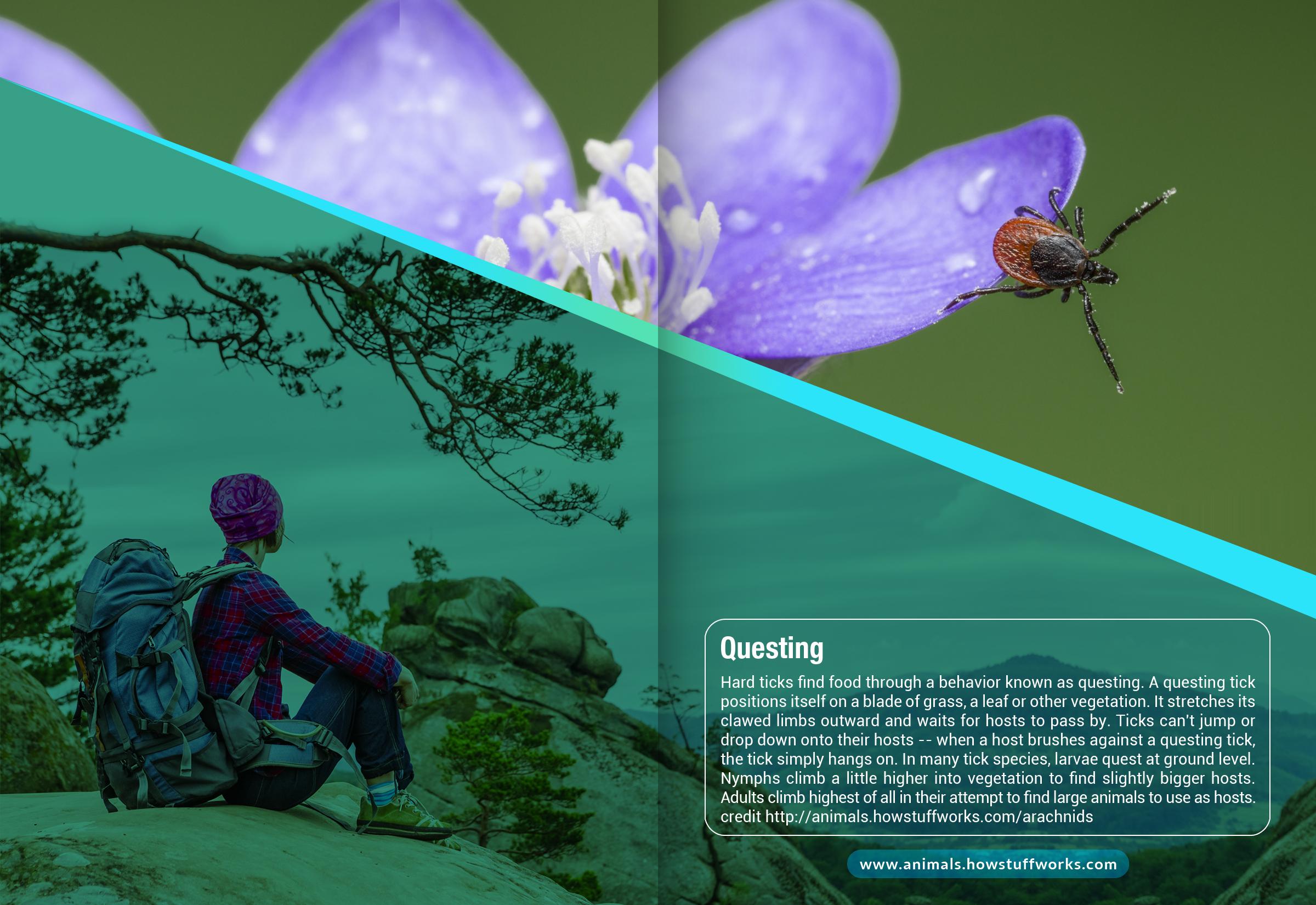 Tick Disease and Testing_Brochure_Inside_7_150617.jpg