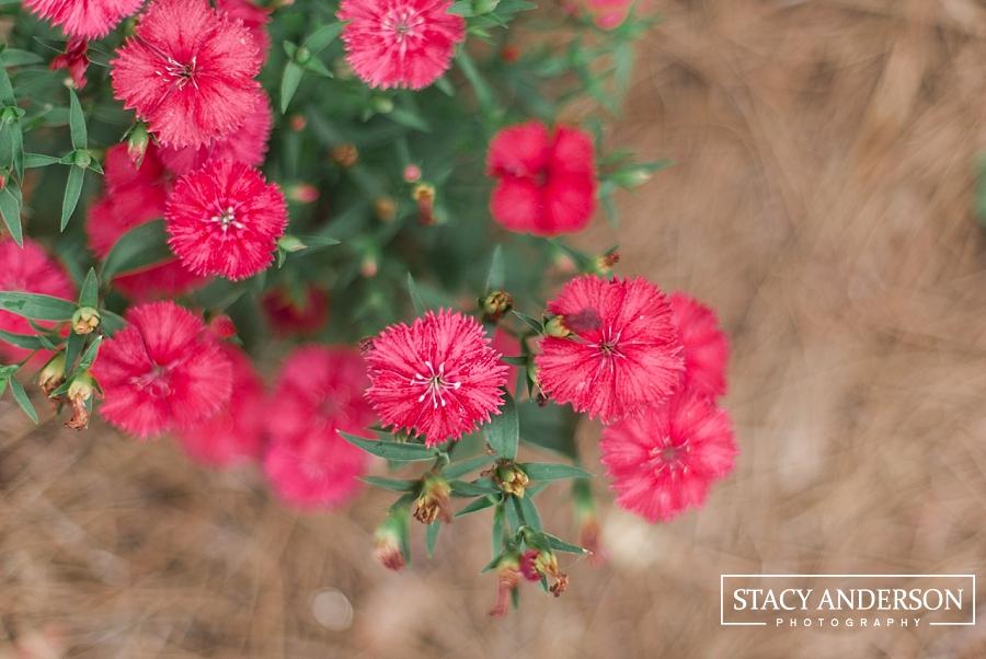 Stacy Anderson Photography Houston McGovern Centennial Gardens_1629