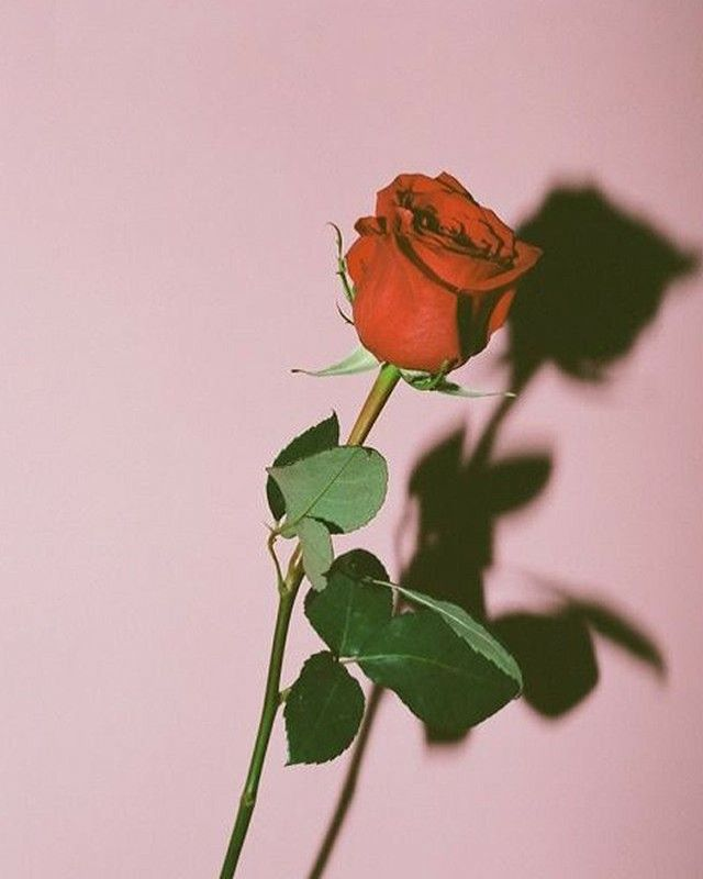 """""""Some women feel the need to act like they're never scared, needy or hurt; they're as hardened as a man. I think that's dishonest. It's okay to feel delicate sometimes. Real beauty is in the fragility of your petals. A rose that never wilts isn't a rose at all"""" Crystal Woods"""