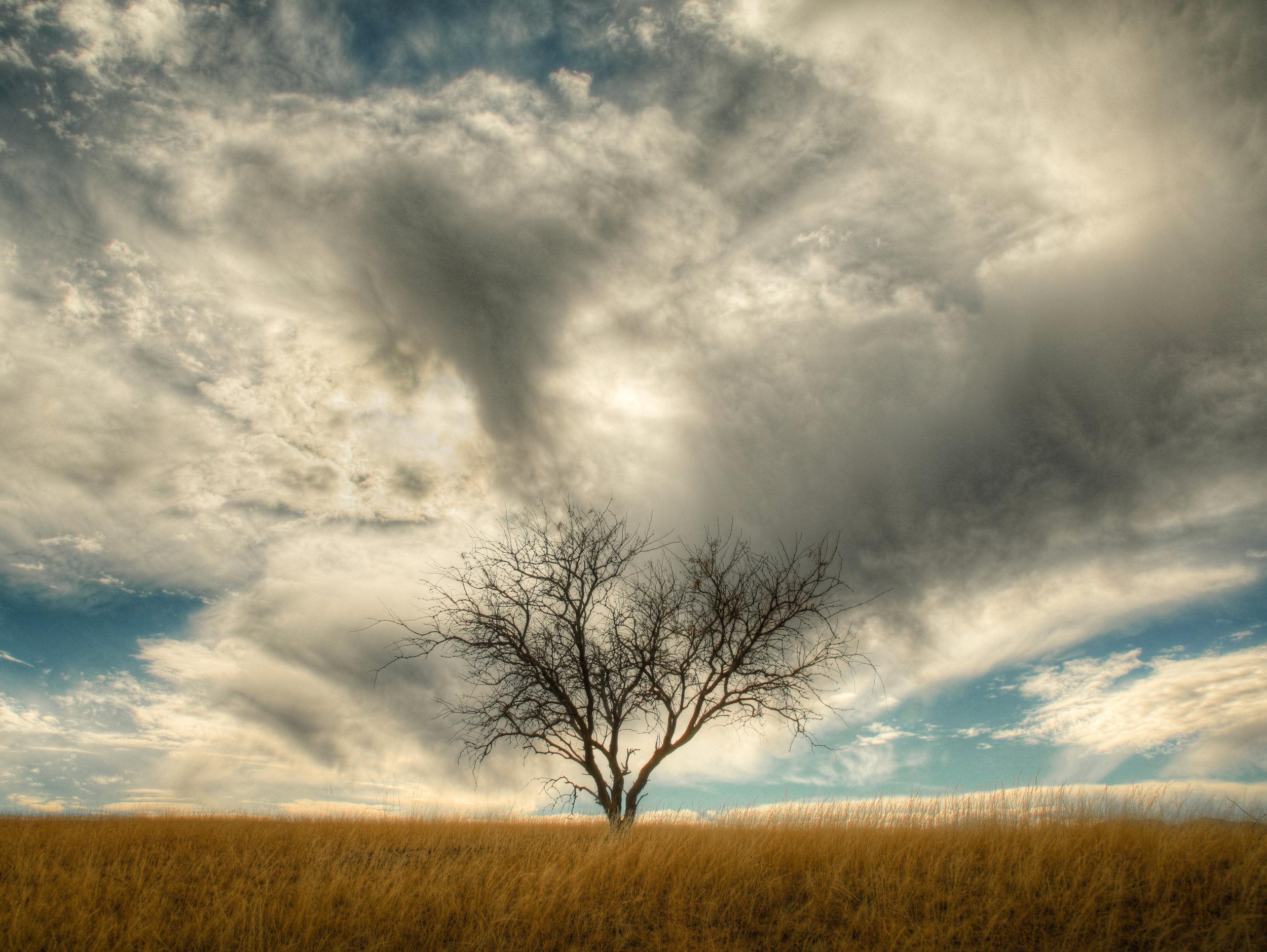 CloudTree2.jpg