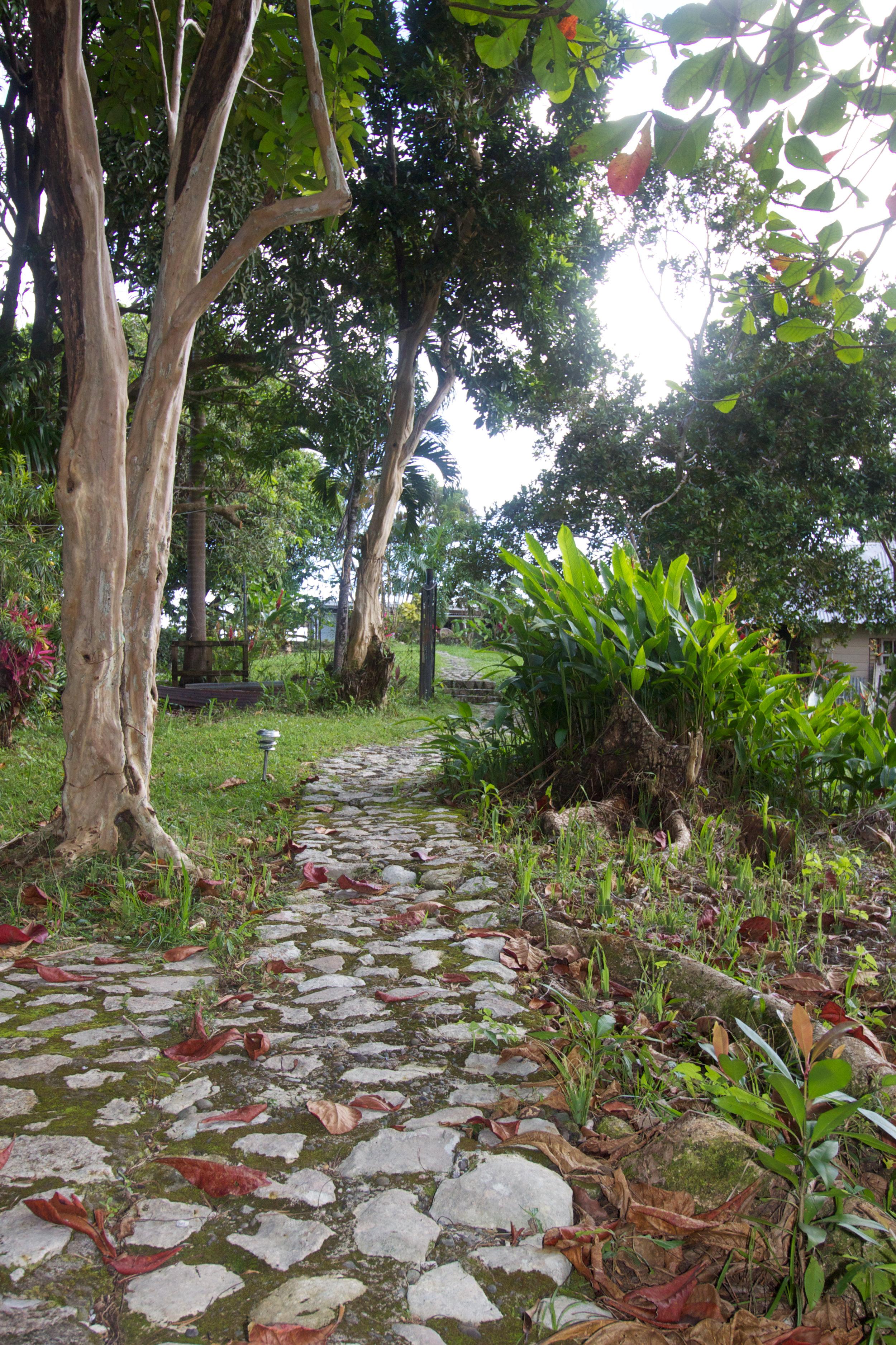 8. Backyard looking toward Micha's studio.jpg