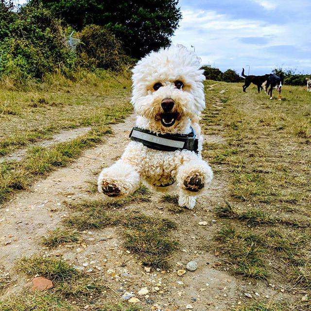 Feel good friyays! We ❤️ an action shot! 🚀 #dog #dogs #dogsofinstagram #dogwalker #dogwalking
