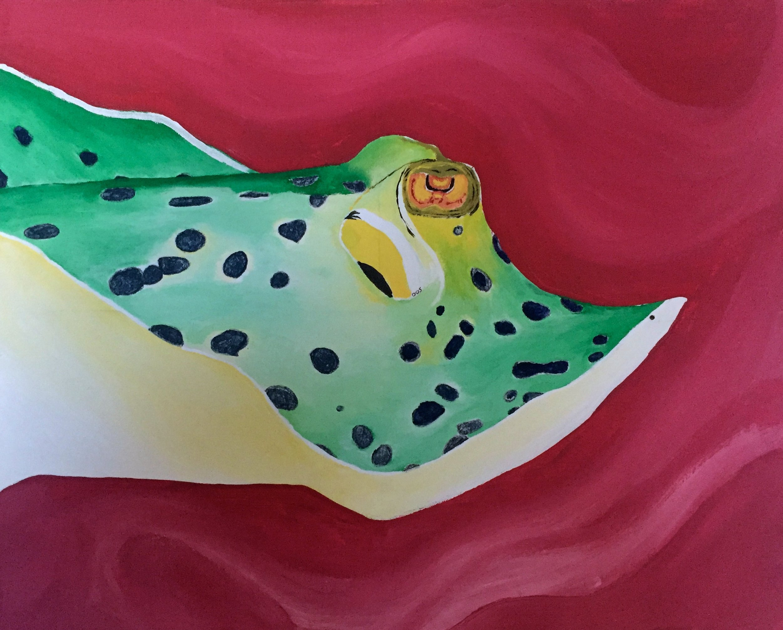 Blue-Spotted Fantail Ray ( Taeniura   lymma ) Owen O'Shea Acrylic on Canvas