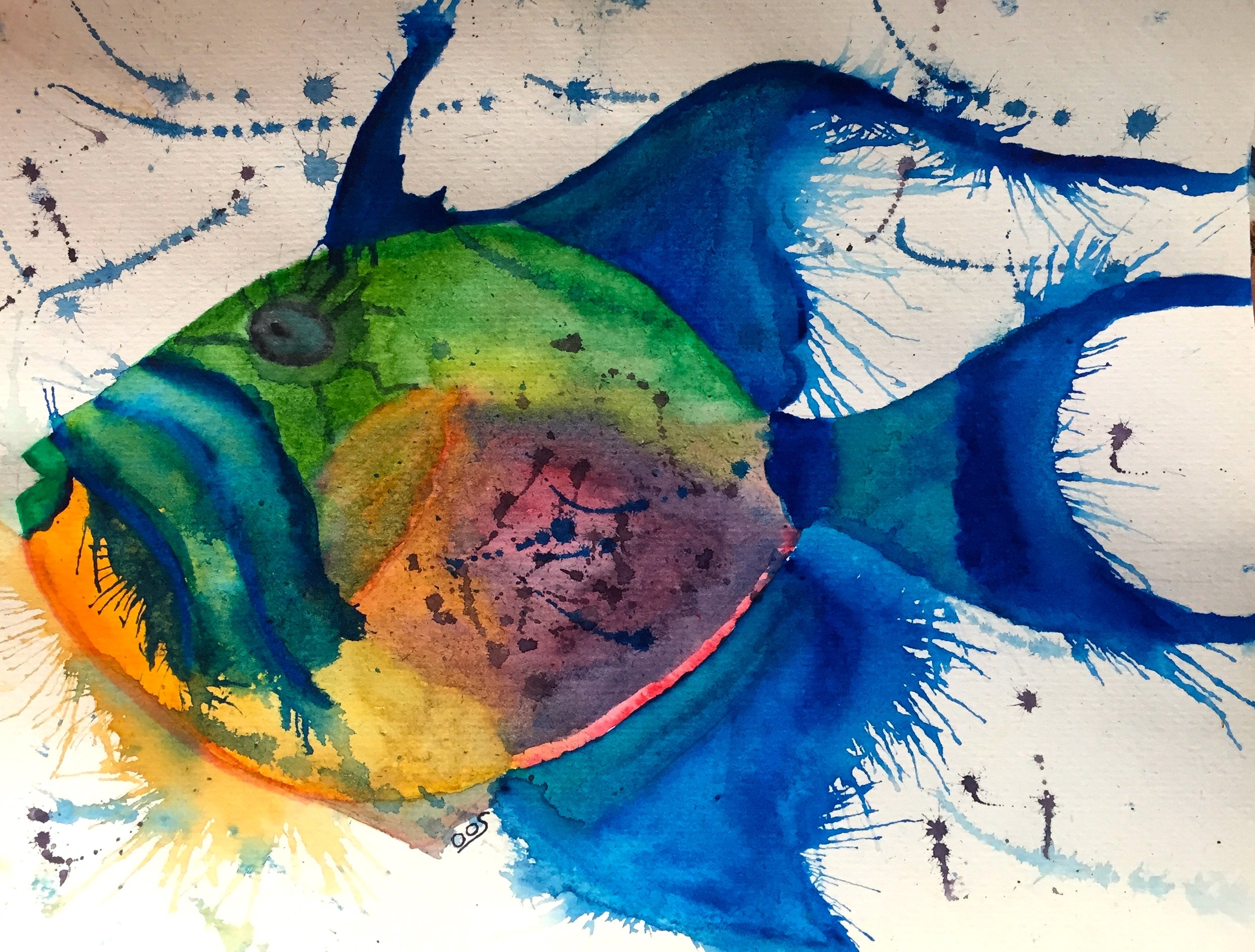 Queen Triggerfish ( Balistes vetula ) Owen O'Shea Watercolour