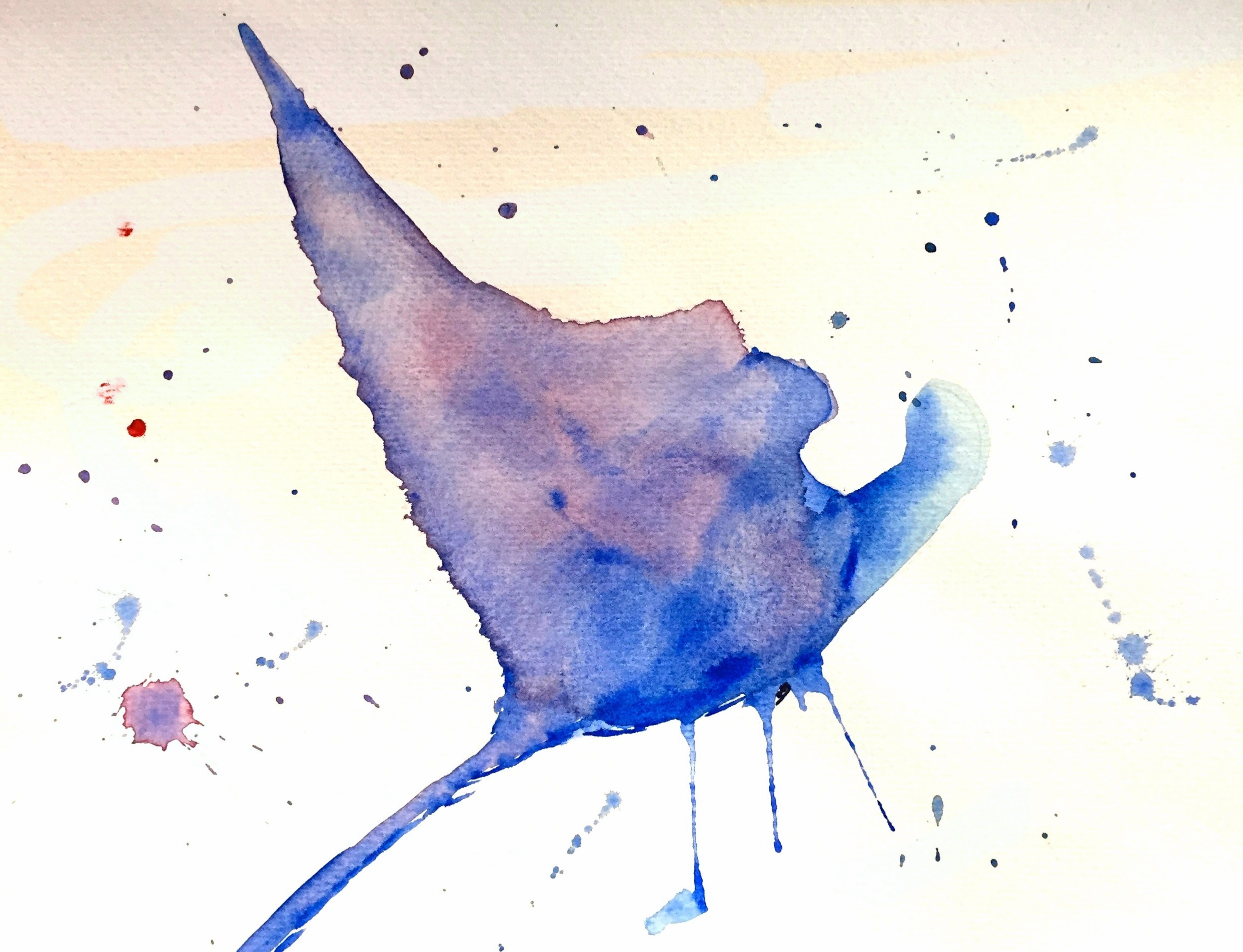 Manta Ray ( Manta  sp.) Owen O'Shea Watercolour