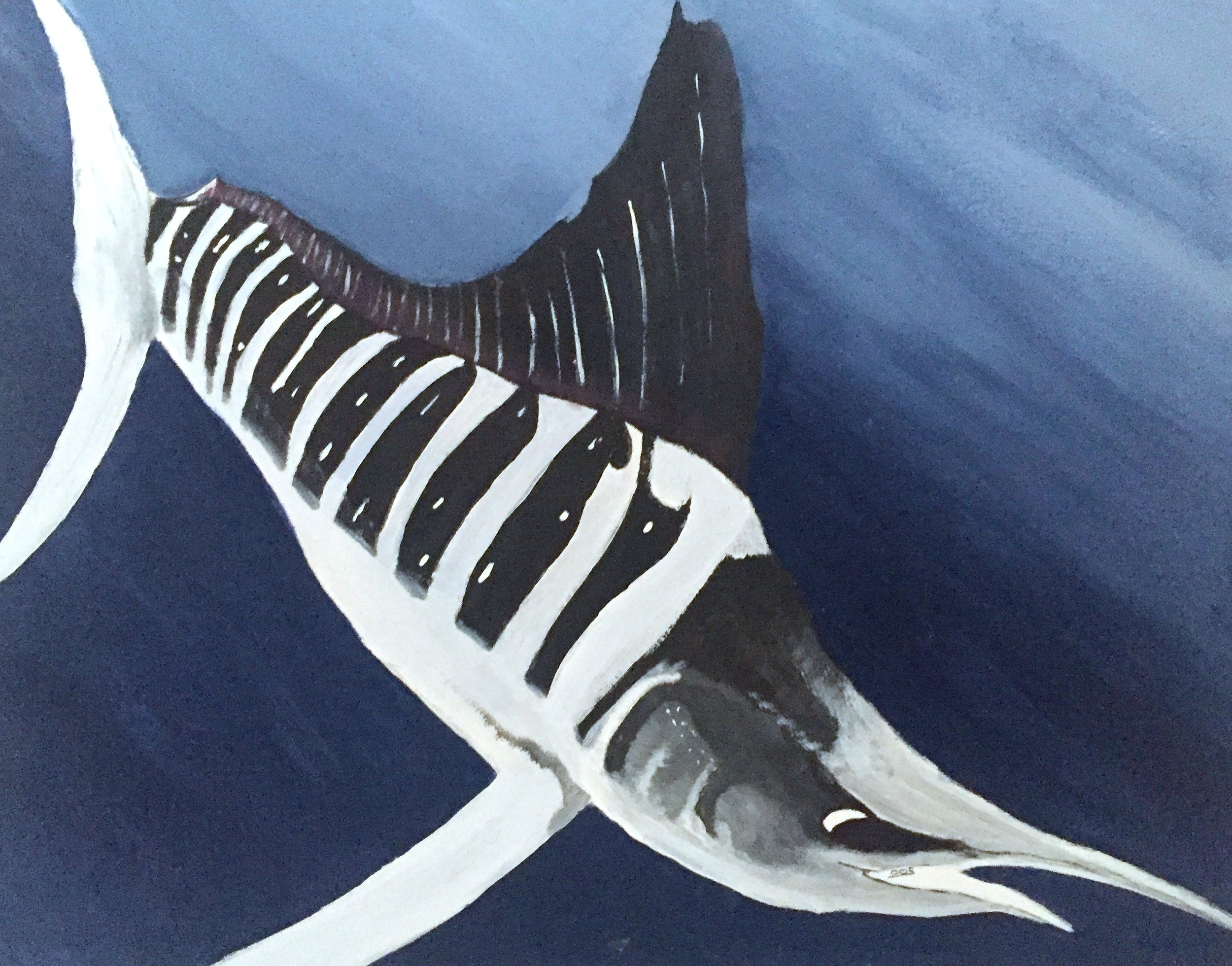 White Marlin ( Kajikia albidus ) Owen O'Shea Acrylic on Canvas