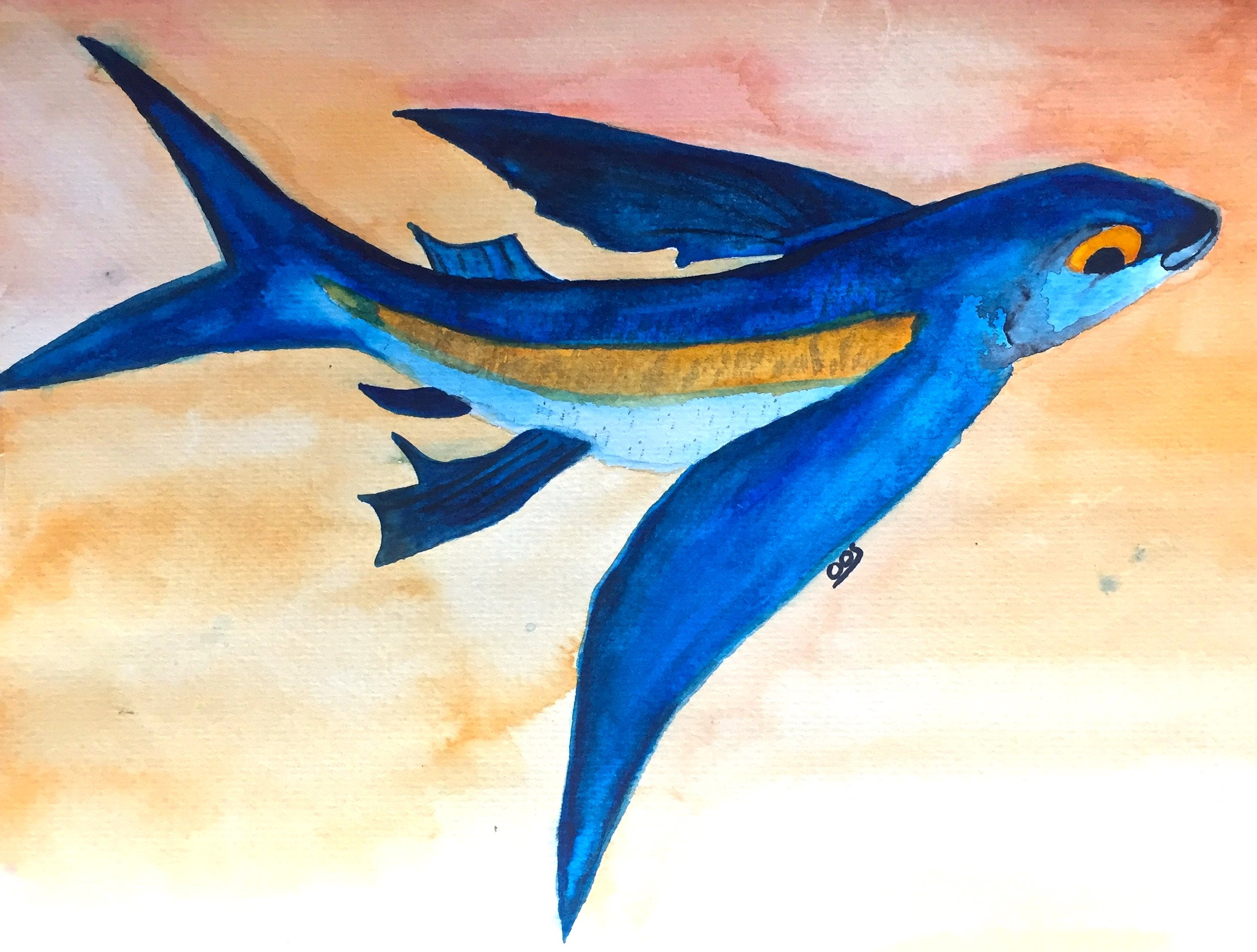 Atlantic Flying Fish ( Cheilopogon melanurus ) Owen O'Shea Watercolour