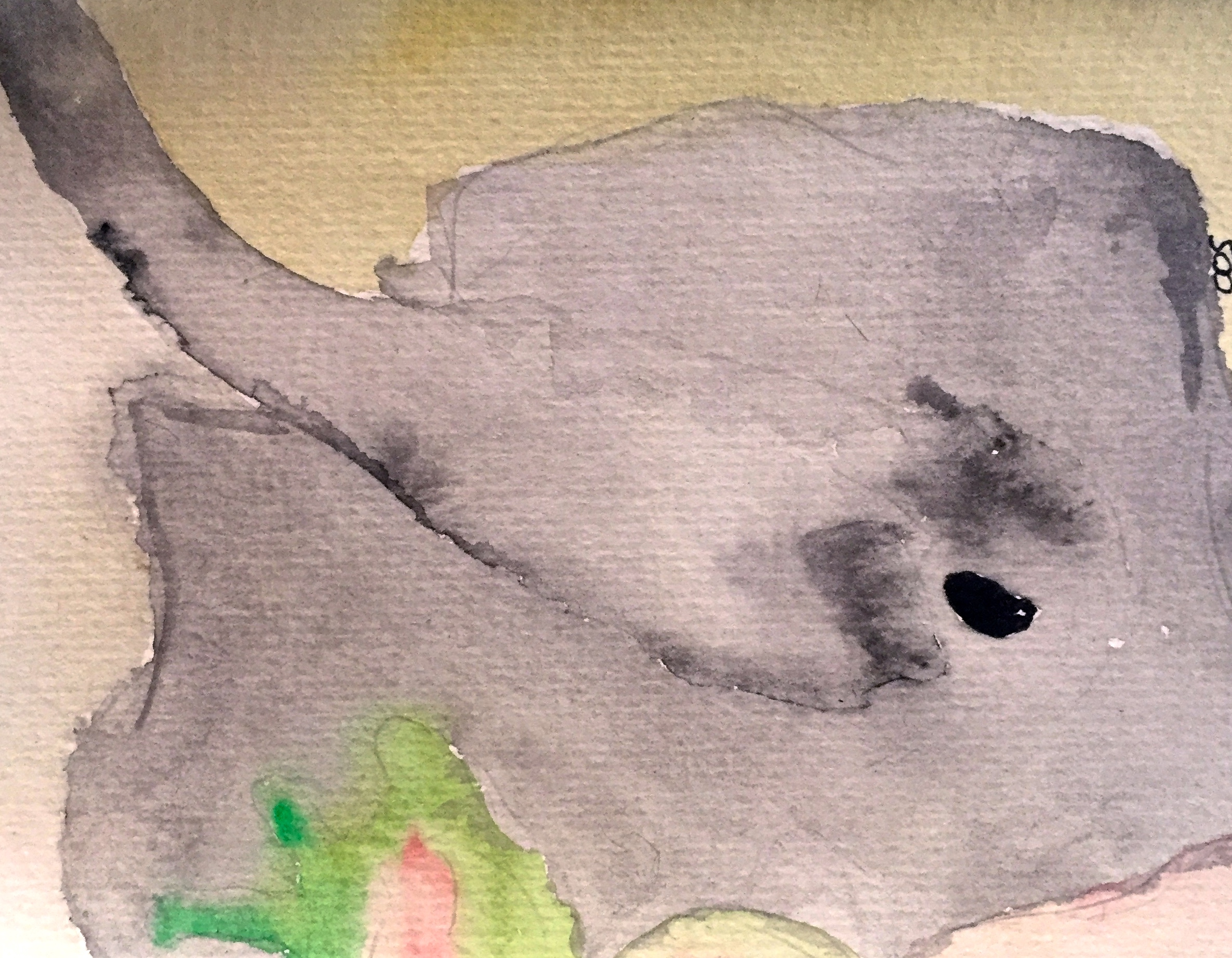 Juvenile Atlantic Chupare Stingray ( Styracura schmardae ) Owen O'Shea Watercolour