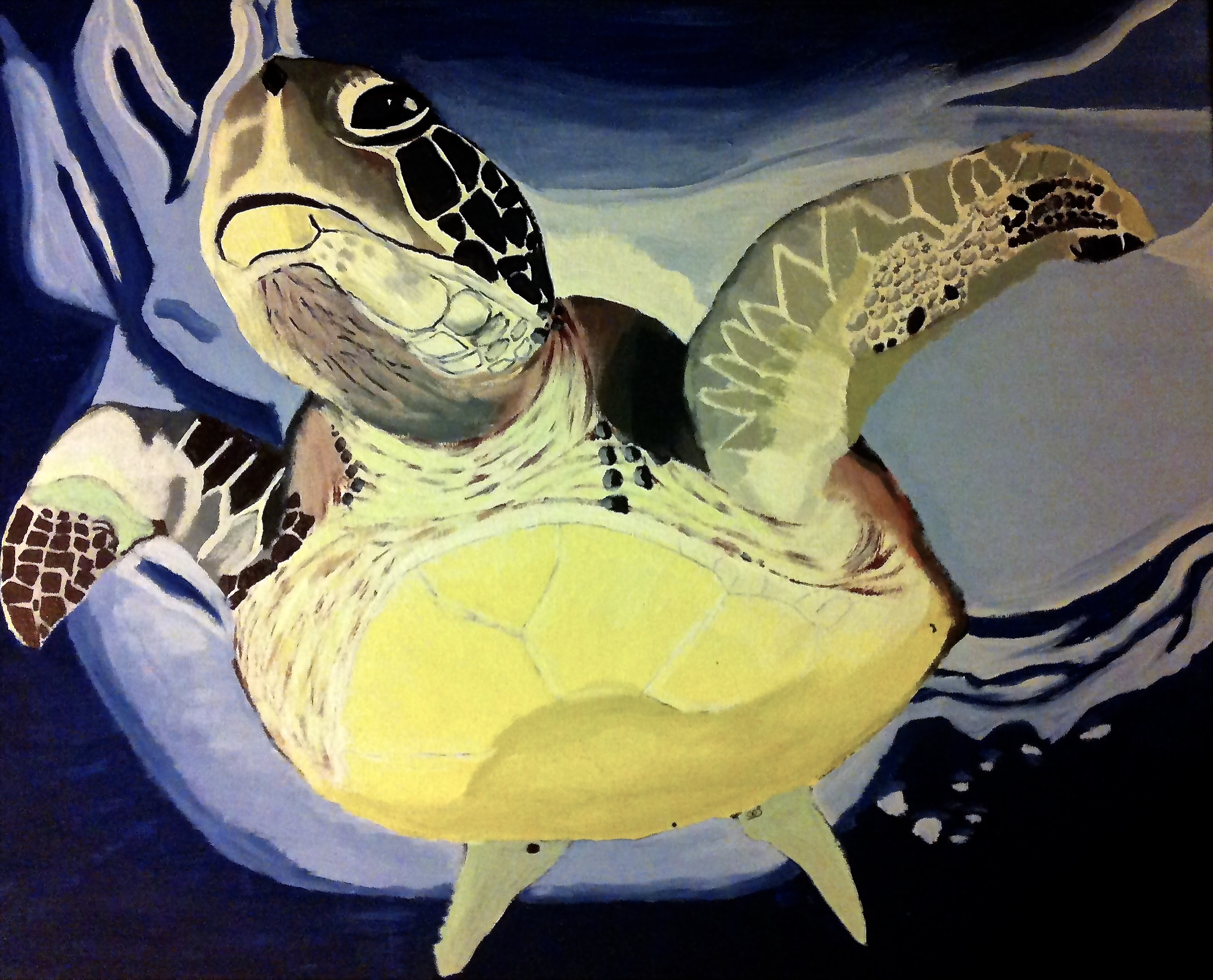 Green Turtle ( Chelonia mydas ) Owen O'Shea Acrylic on Canvas