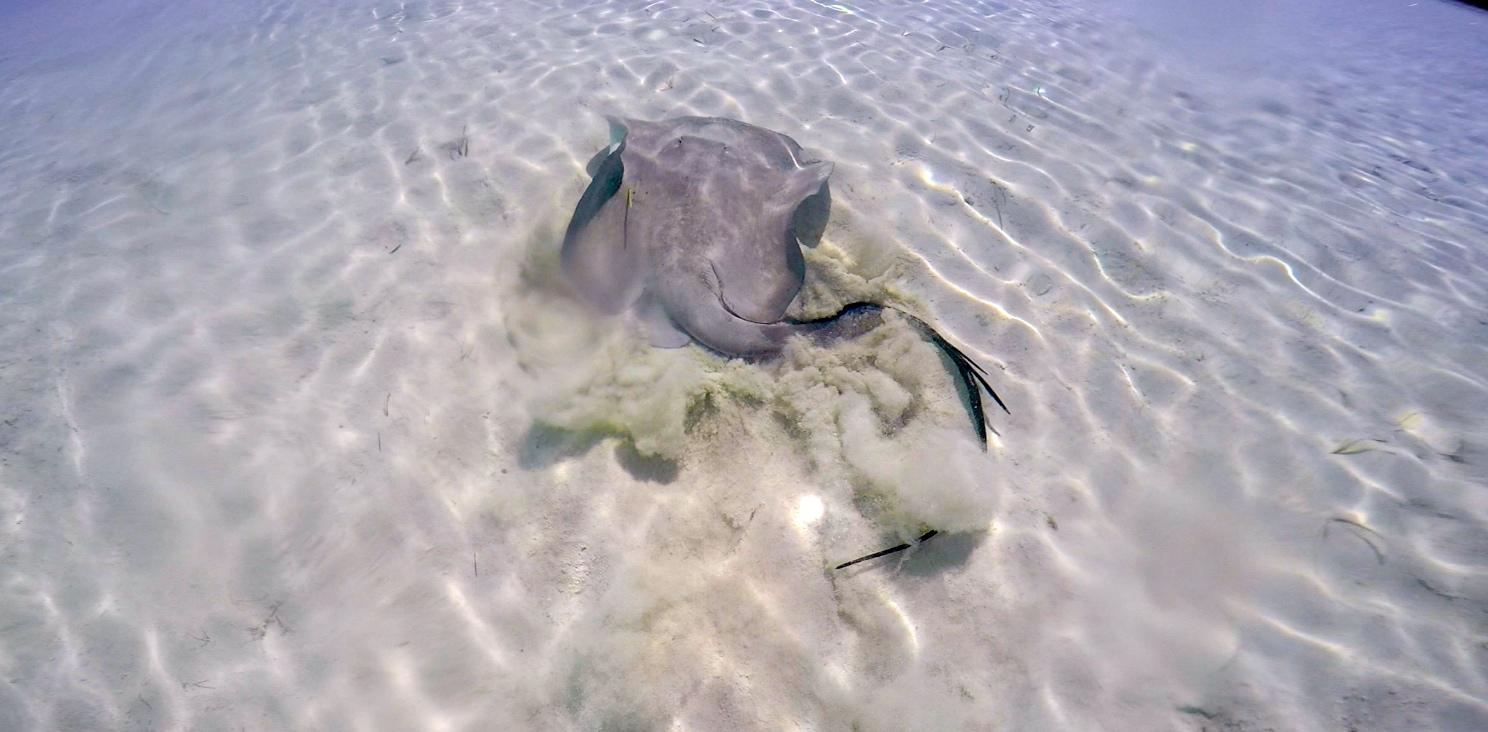 Atlantic Chupare - Normans Cay 2016