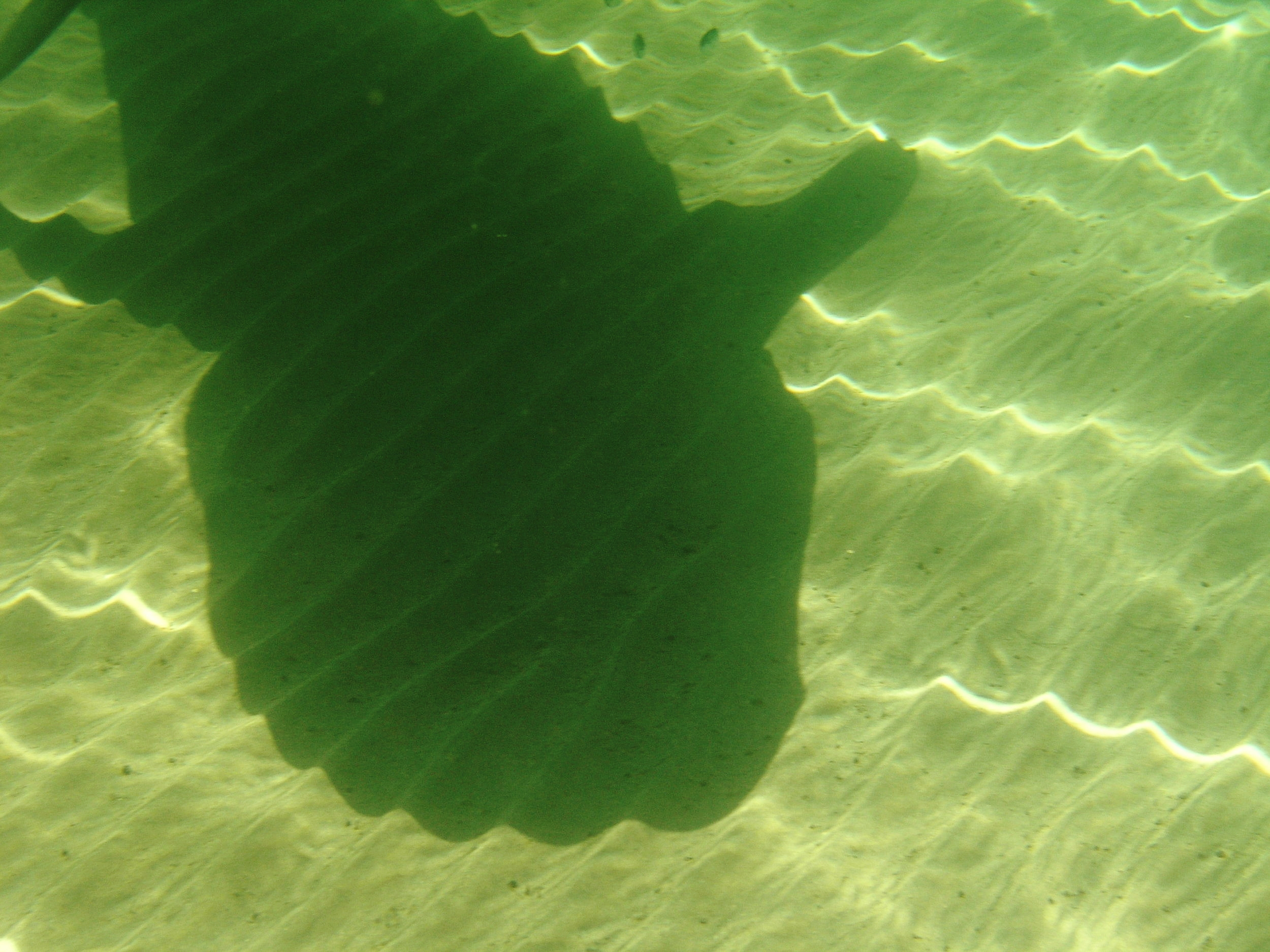 Tiger Shadow - Gulf of Exmouth 2009