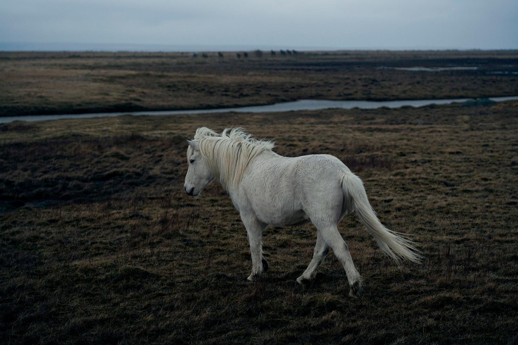 218807-11227734-Iceland_Day06-01-001793_jpg.jpg