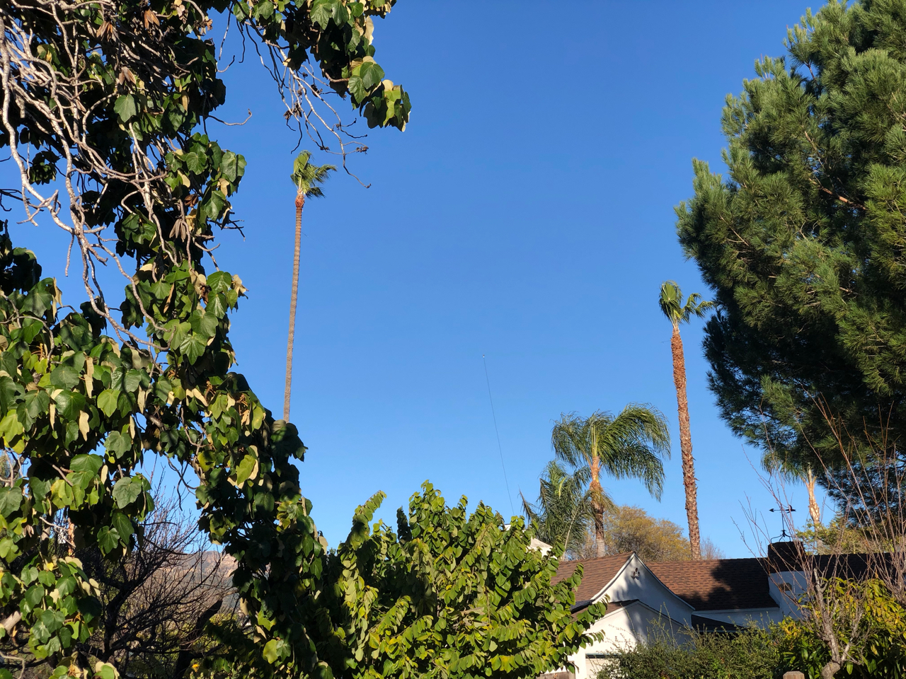 Dipole antenna strung between the Palm trees.