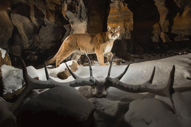 lions (1 of 2)-2.jpeg