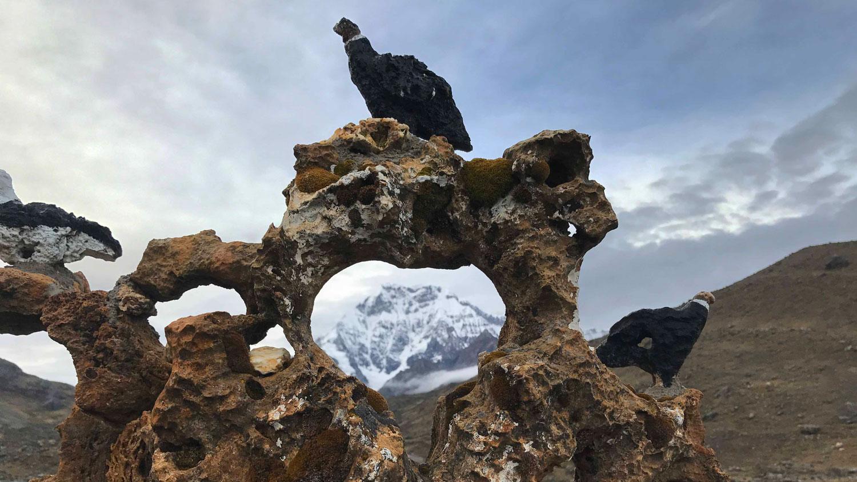 Condor-Image E.jpg