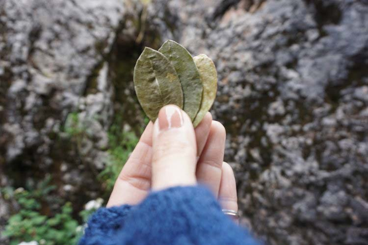 Receive Guidance - WITH INCA COCA LEAF READING