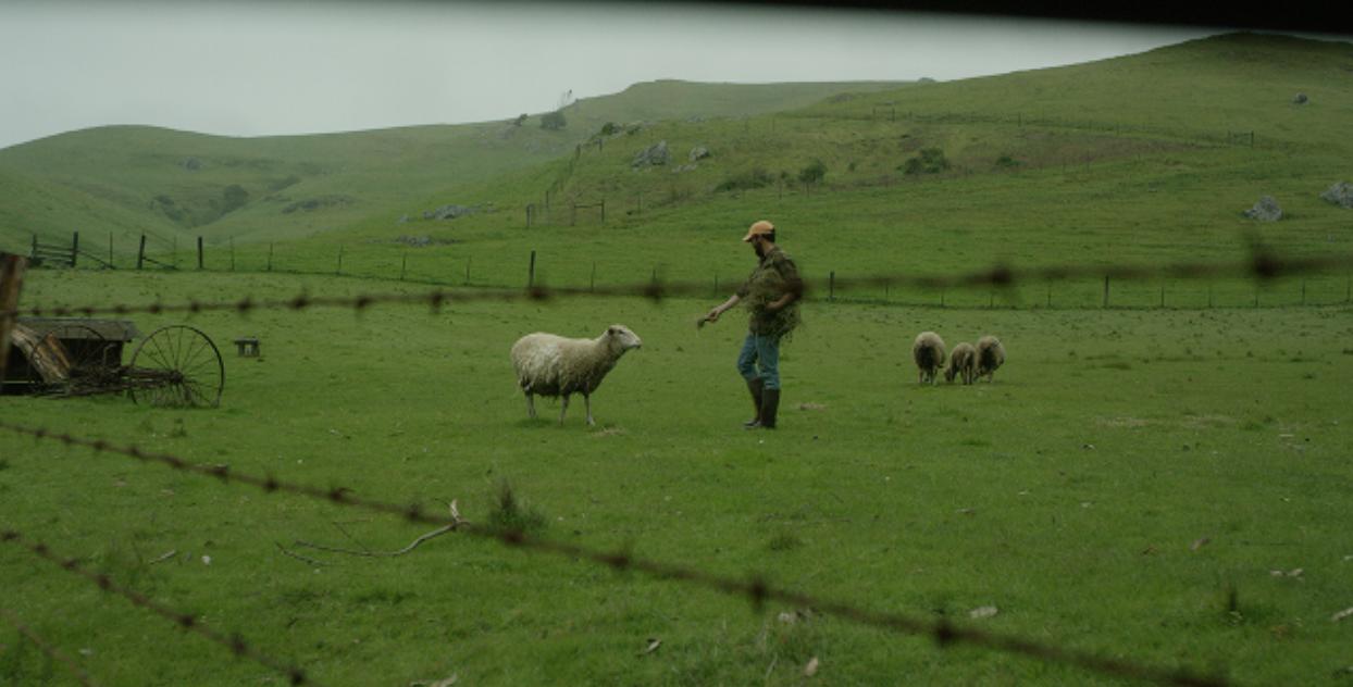 Daniel Sheep 2.png