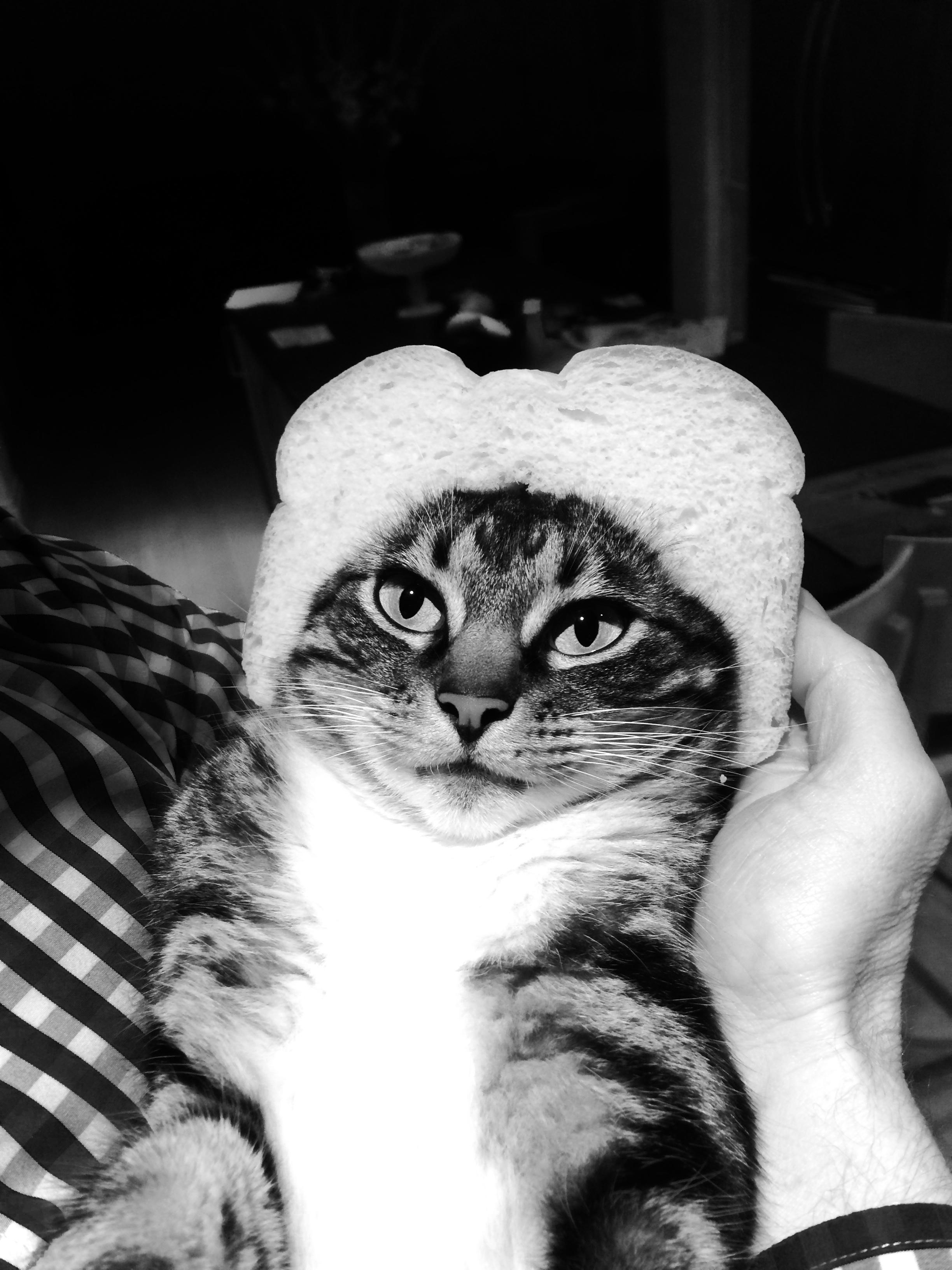 kittsie bread cat
