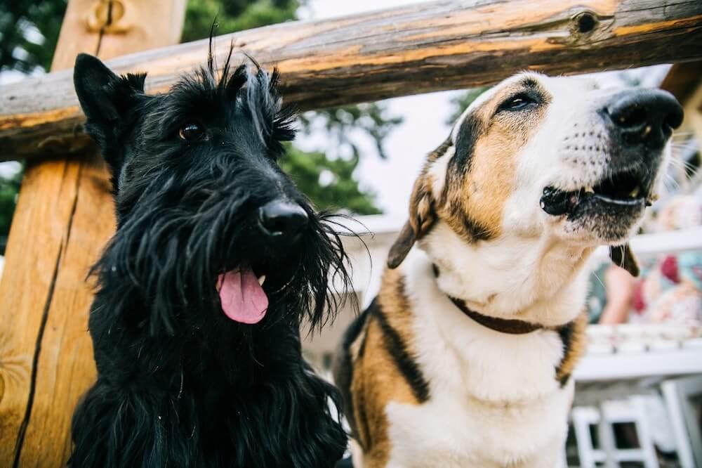 Health benefits dog ownership - Pooky & Boo.jpg