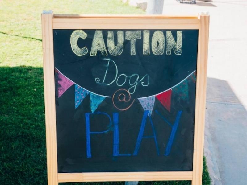 Sandy Paws - dog-friendly market Perth