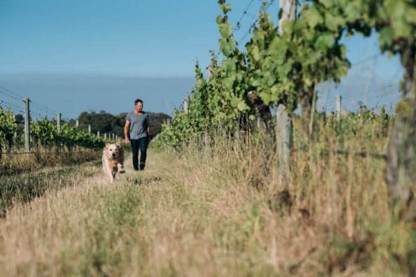 Best pet-friendly wineries and breweries in Margaret River