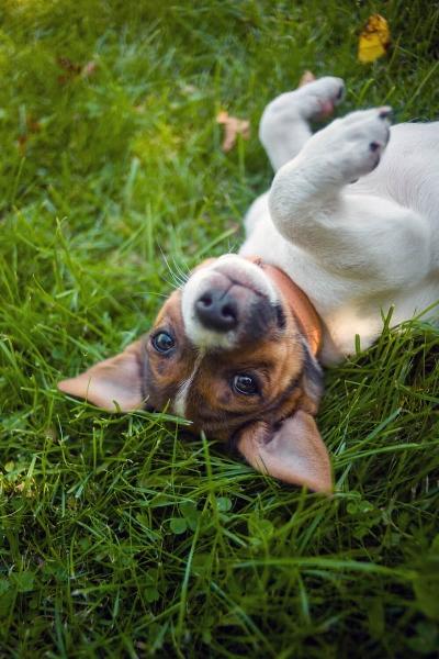 Dog-friendly garden.jpg