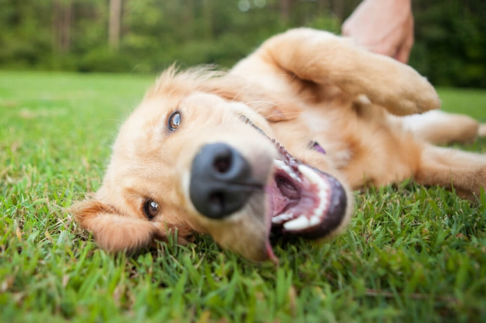 Dog-friendly events Perth spring.jpg