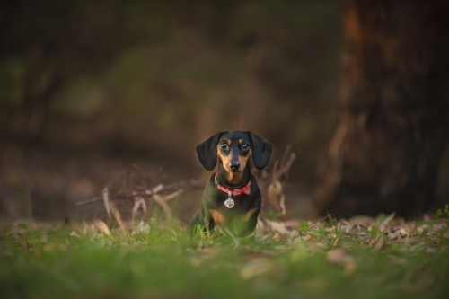 Pet photography by  Furry Hearts photography