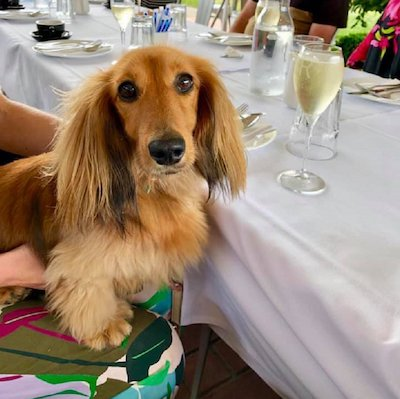 Paws and Pours High Tea, Gourmet Pawprints