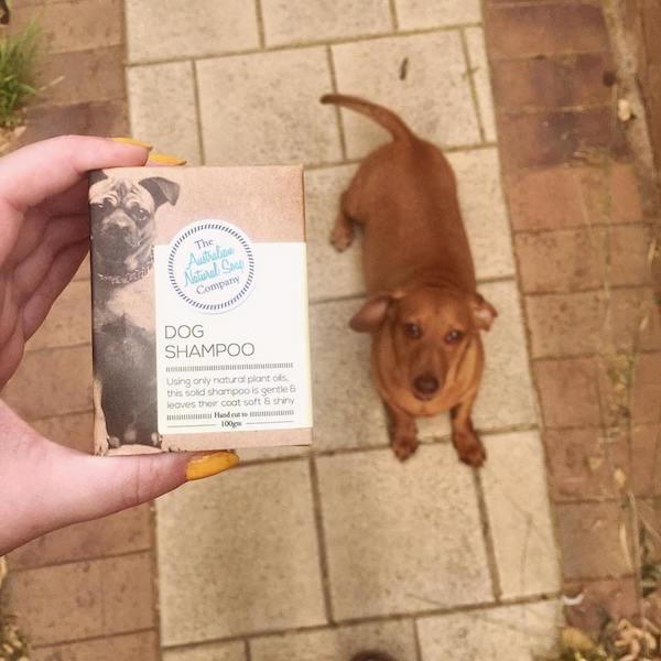 Natural_dog_shampoo.jpg