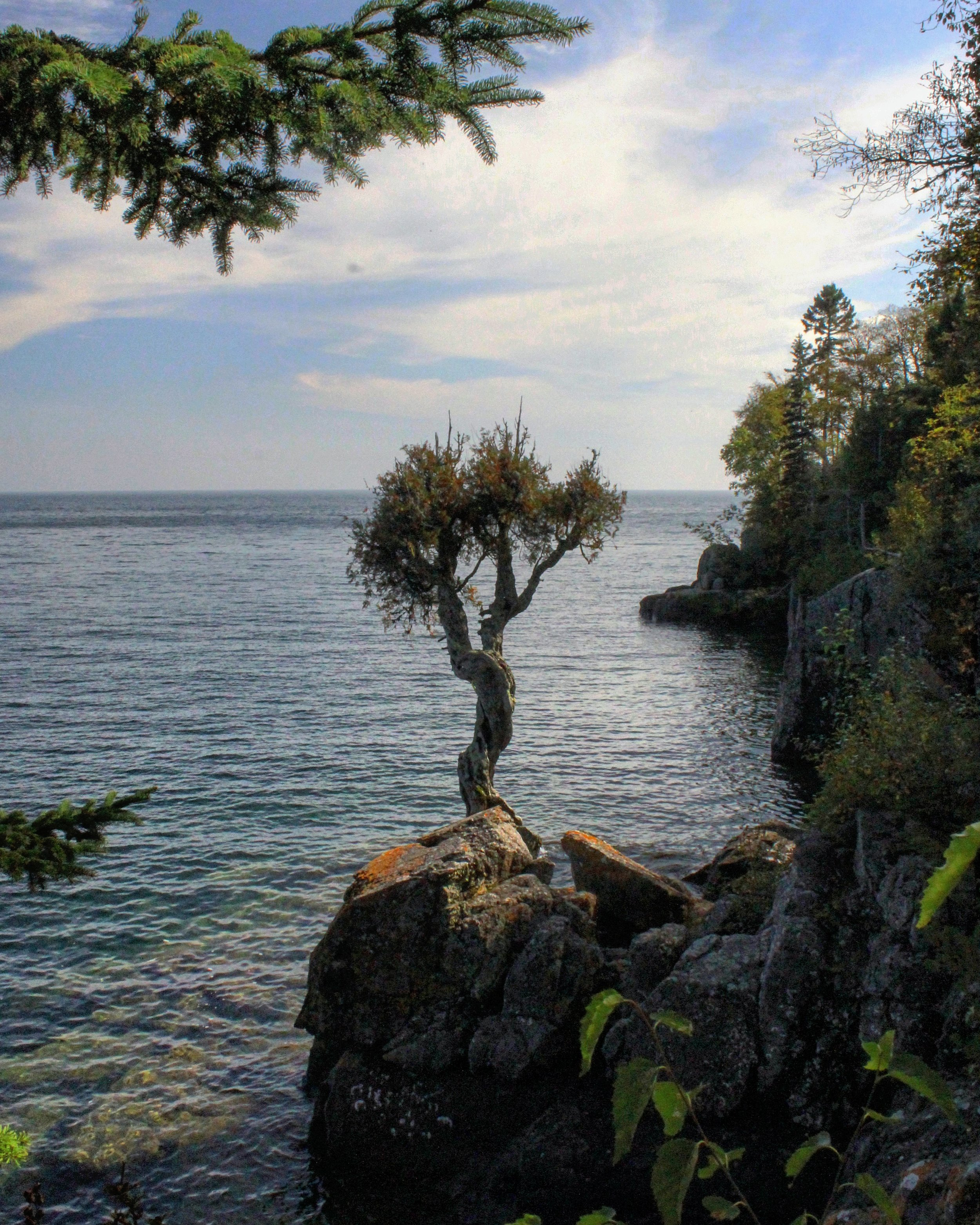 """The """"Spirit Tree"""" has been overlooking the big lake for over 300 years"""