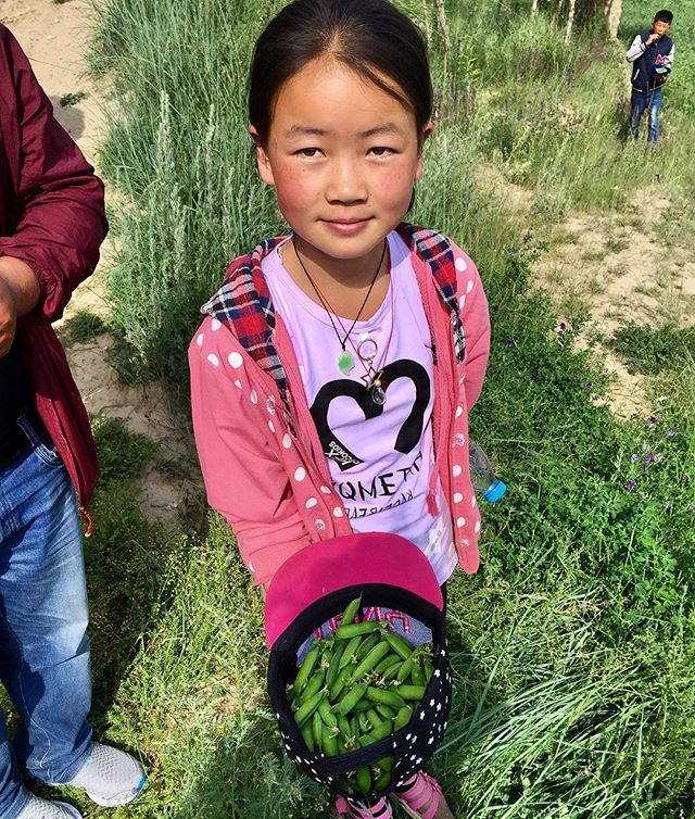 #qinghai #tibetanvillages #beautiful #villagepeopleproject #women #agriculture