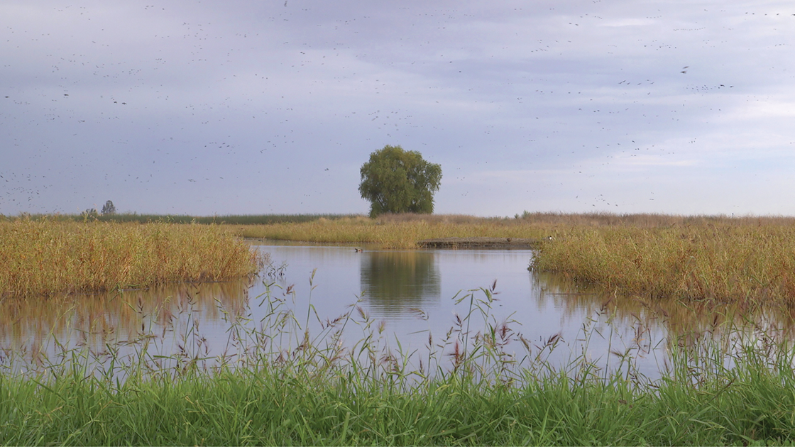 Cynthia Hooper,  Cultivated Ecologies , video still,2018