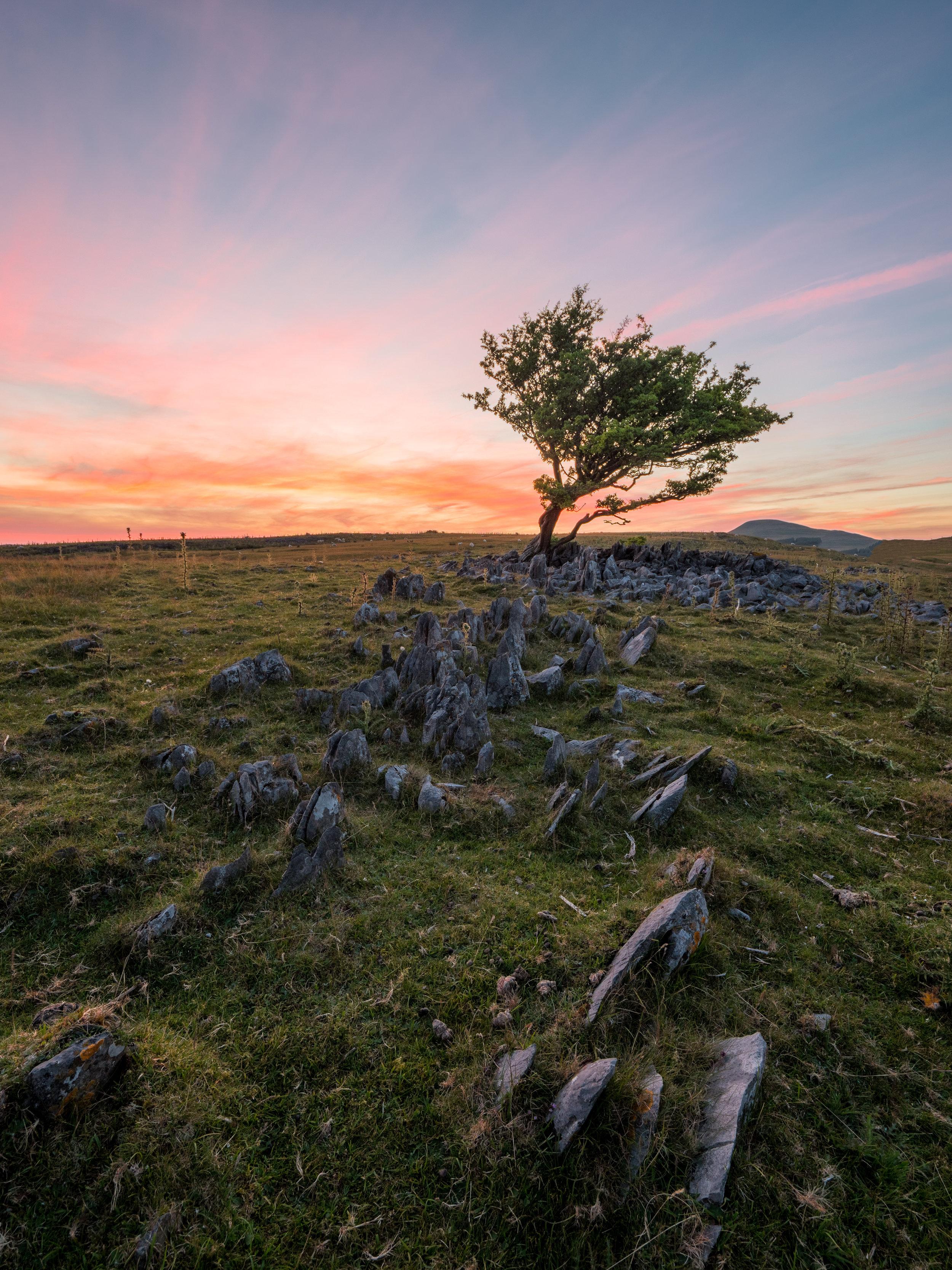Lone Tree Ystradfellte