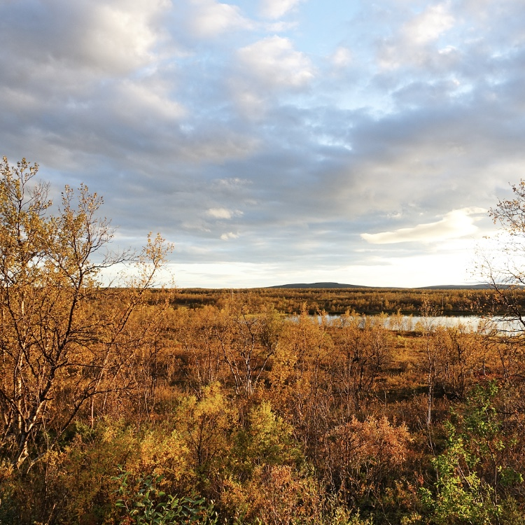 Autumn colors. A September scenery from the surroundings of Kautokeino.
