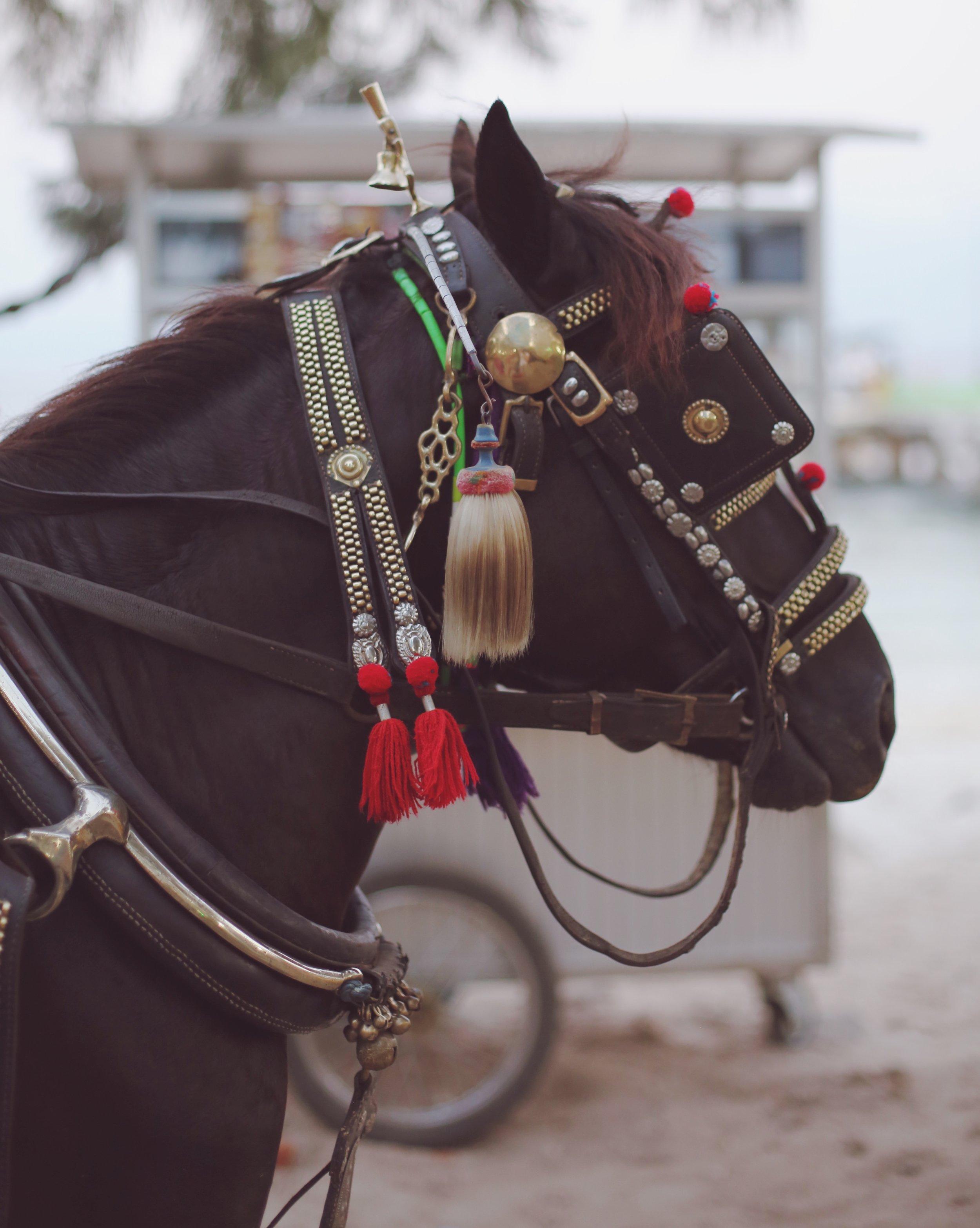 gili islands horses.jpeg