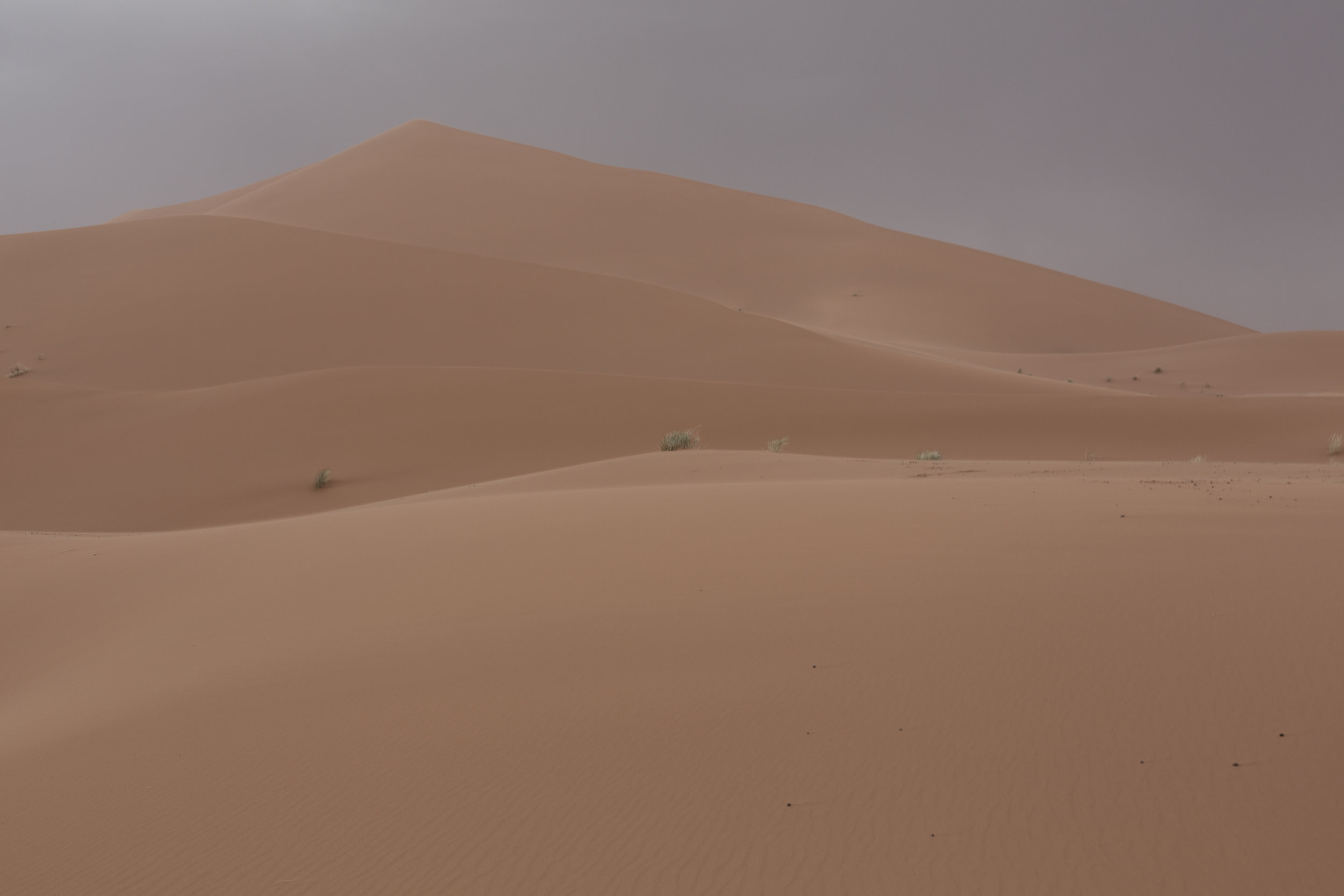 We travelled to our camp in the Sahara on camels, amidst a sandstorm and occasional splashes of rain!