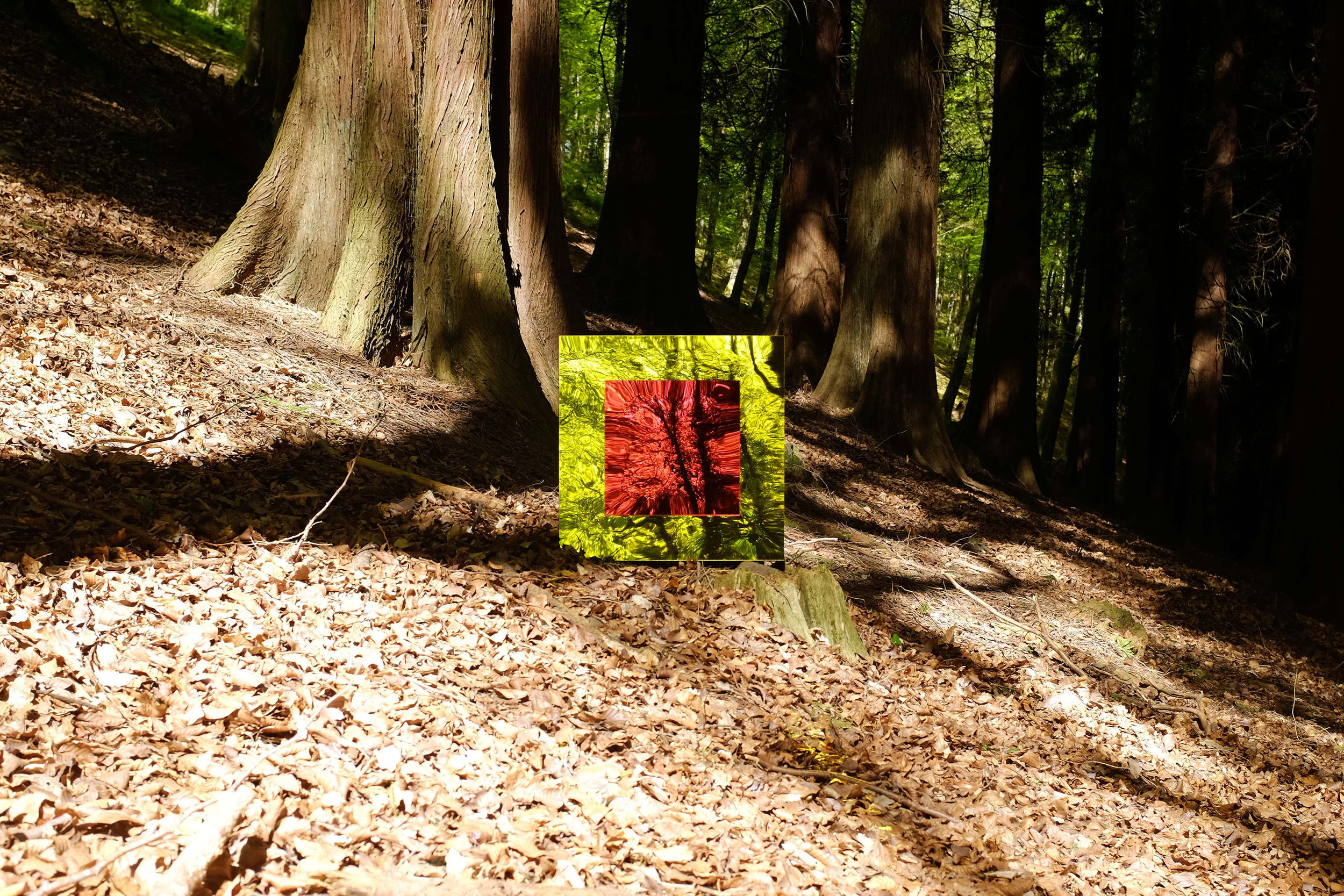 living-identity-great-woods
